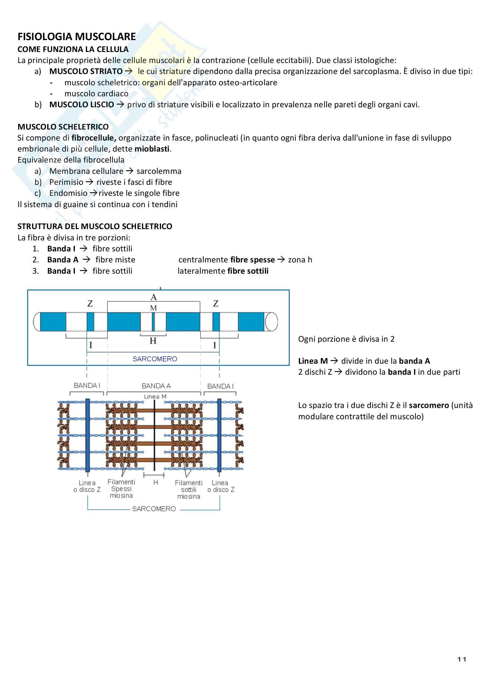 Appunti di fisiologia umana Pag. 11