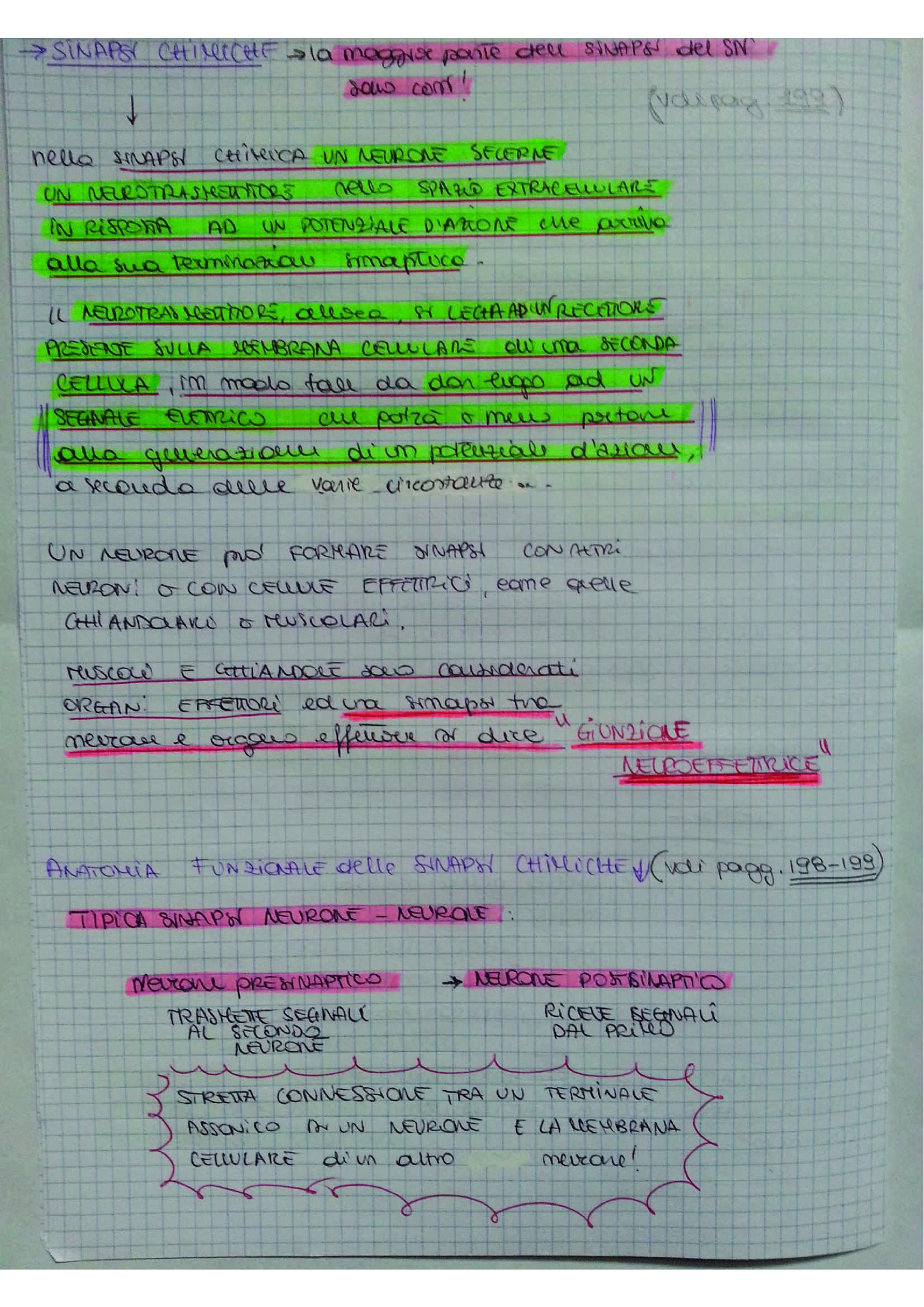 Riassunto esame Fisiologia umana, prof. D'Ascanio, libro consigliato Fisiologia, Stanfield, Germann (sistema nervoso) Pag. 36