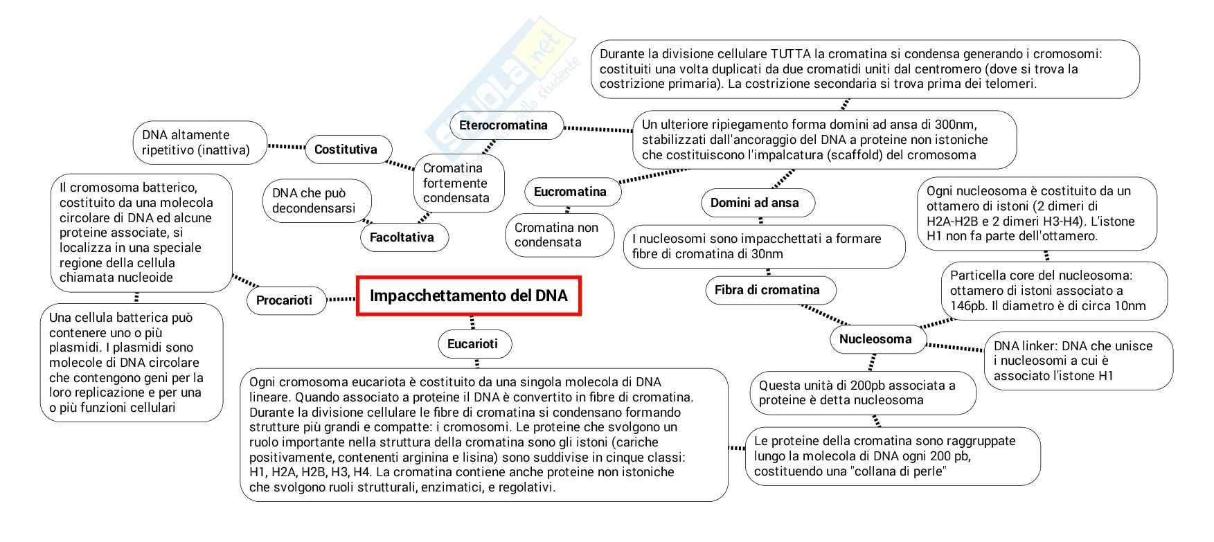 Schema su Dna cromosomi e nucleo pdf