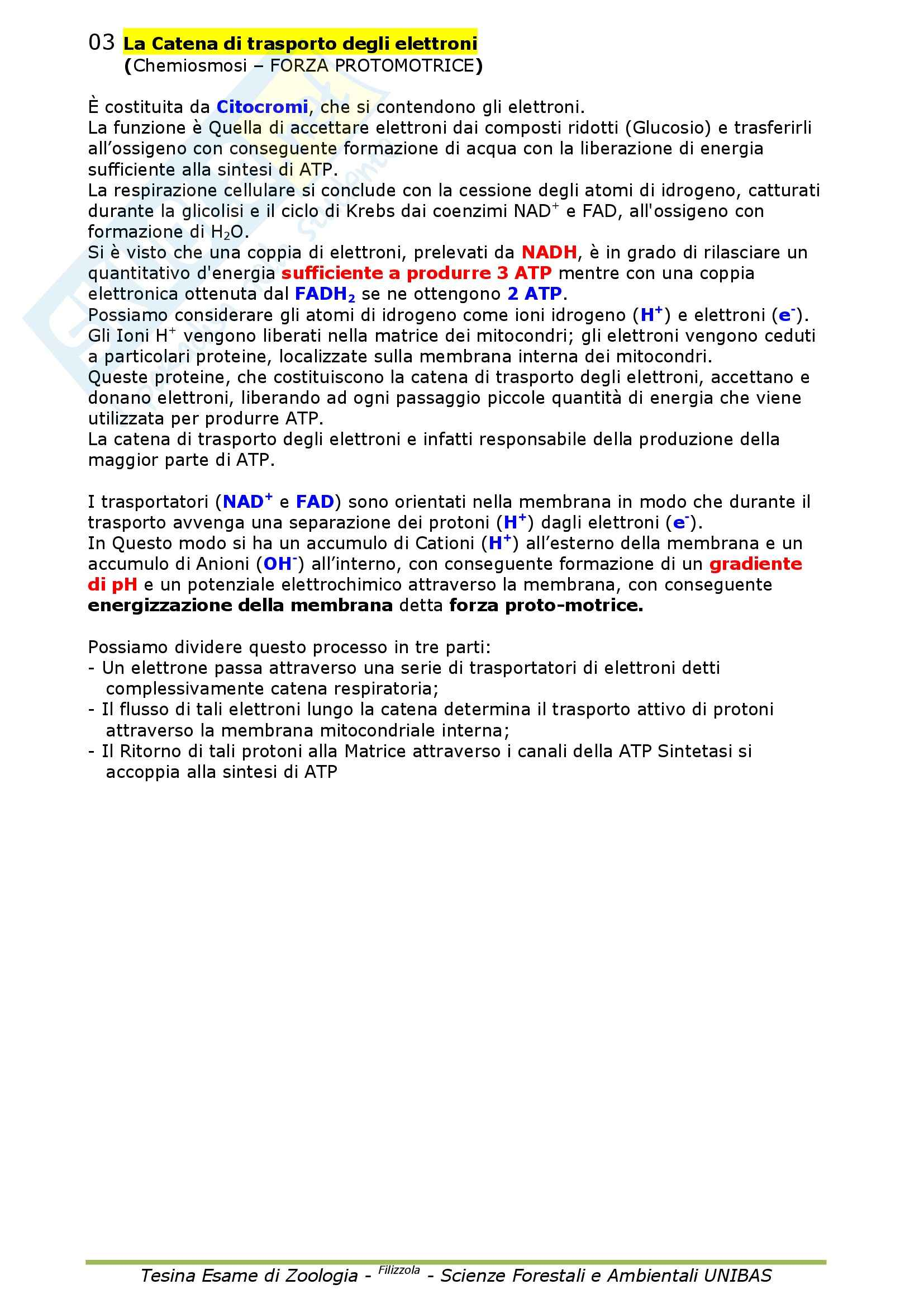 Zoologia Generale Pag. 21