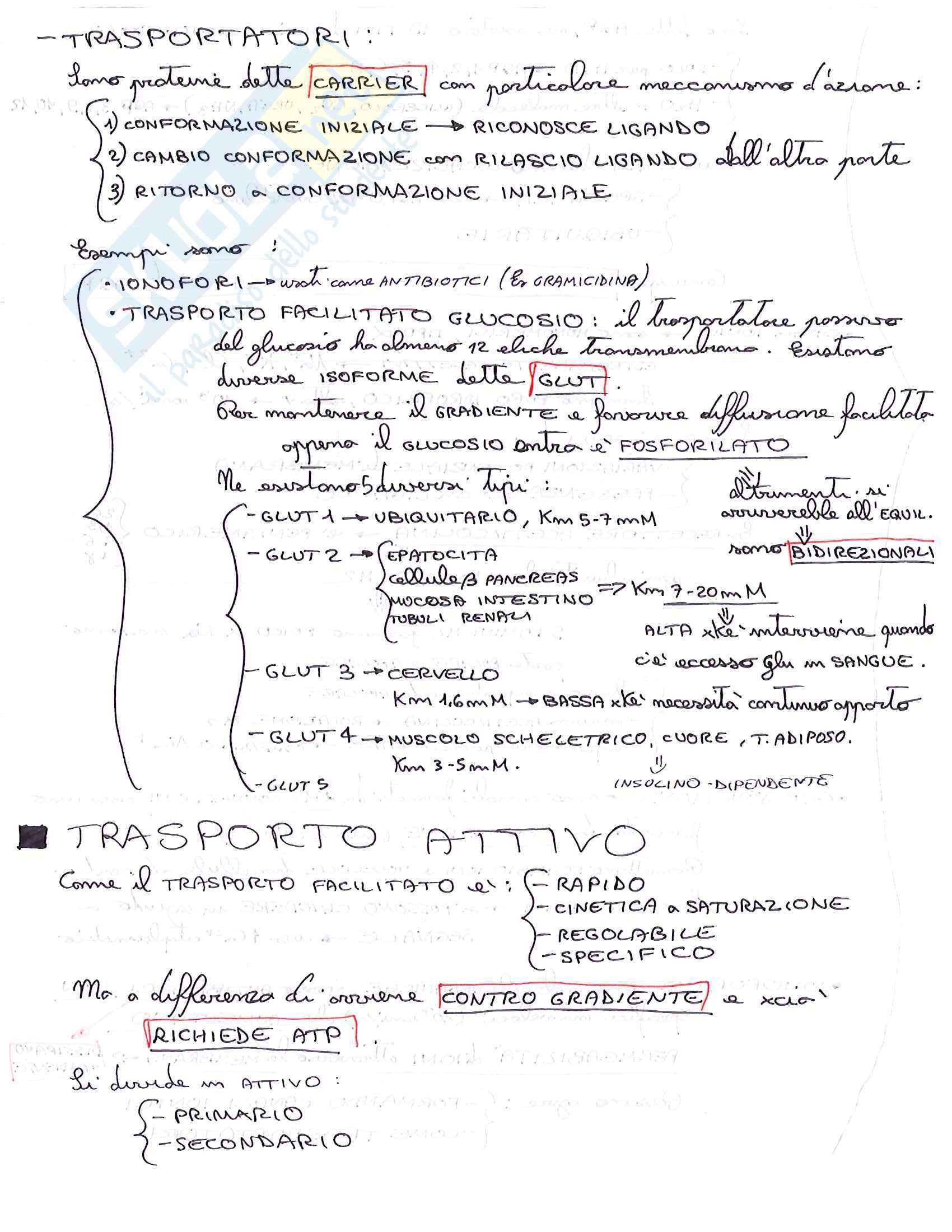 Lezioni, Biochimica medica Pag. 26