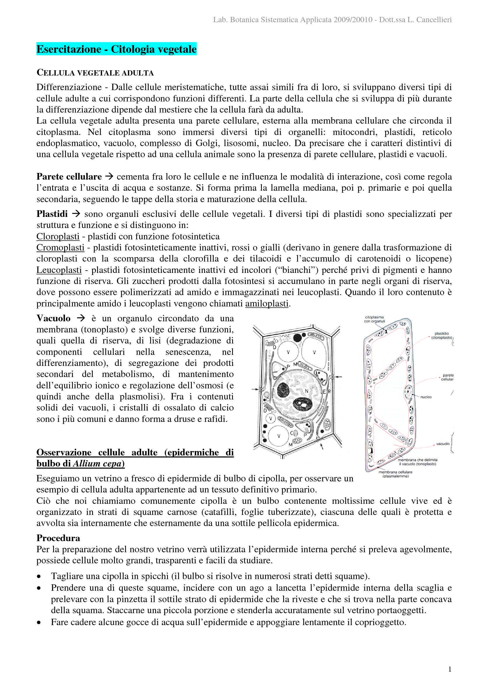 Citologia vegetale - Osservazioni microscopiche
