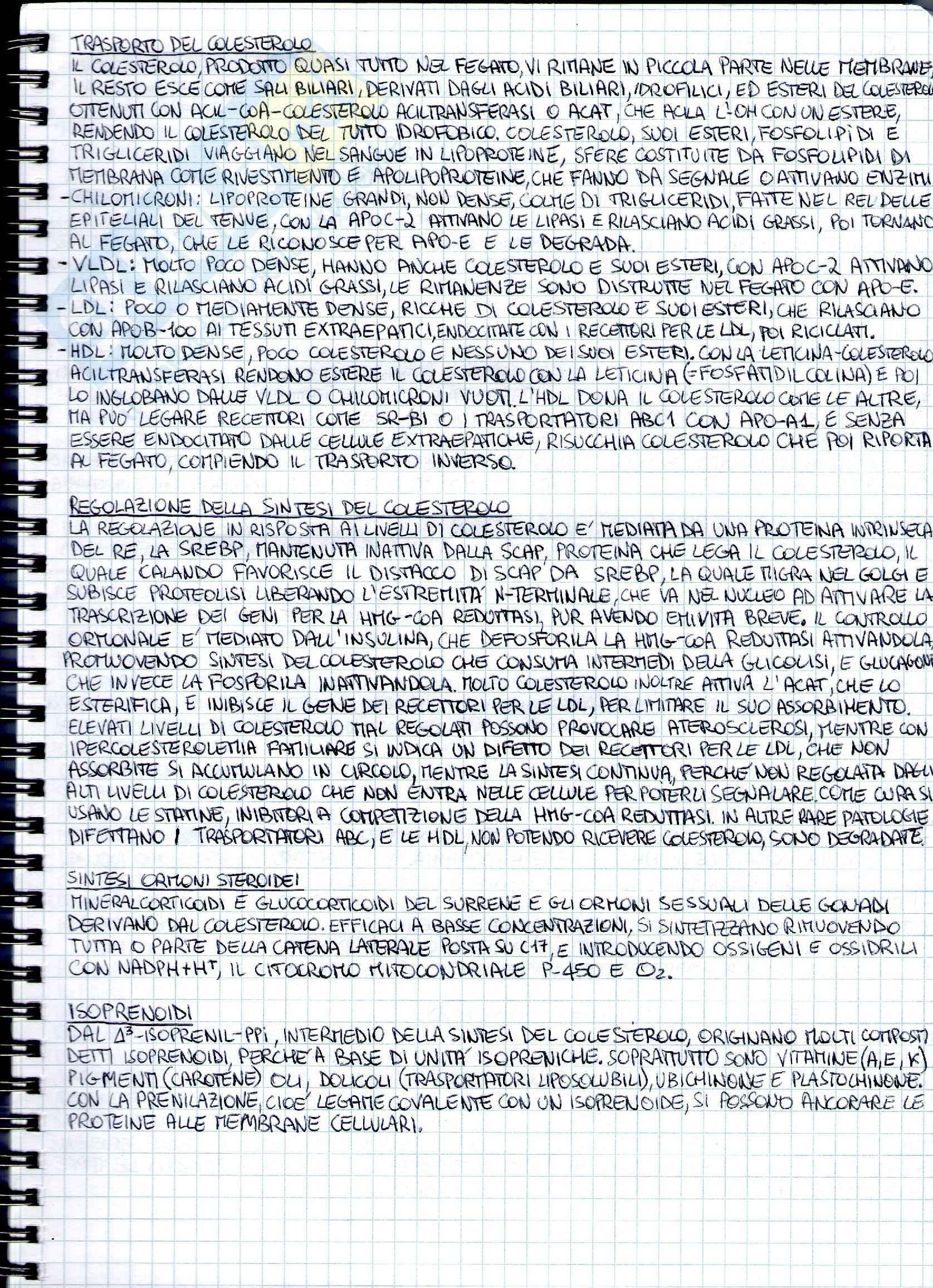 Riassunto esame Biochimica medica generale, prof. Chiarugi Pag. 16