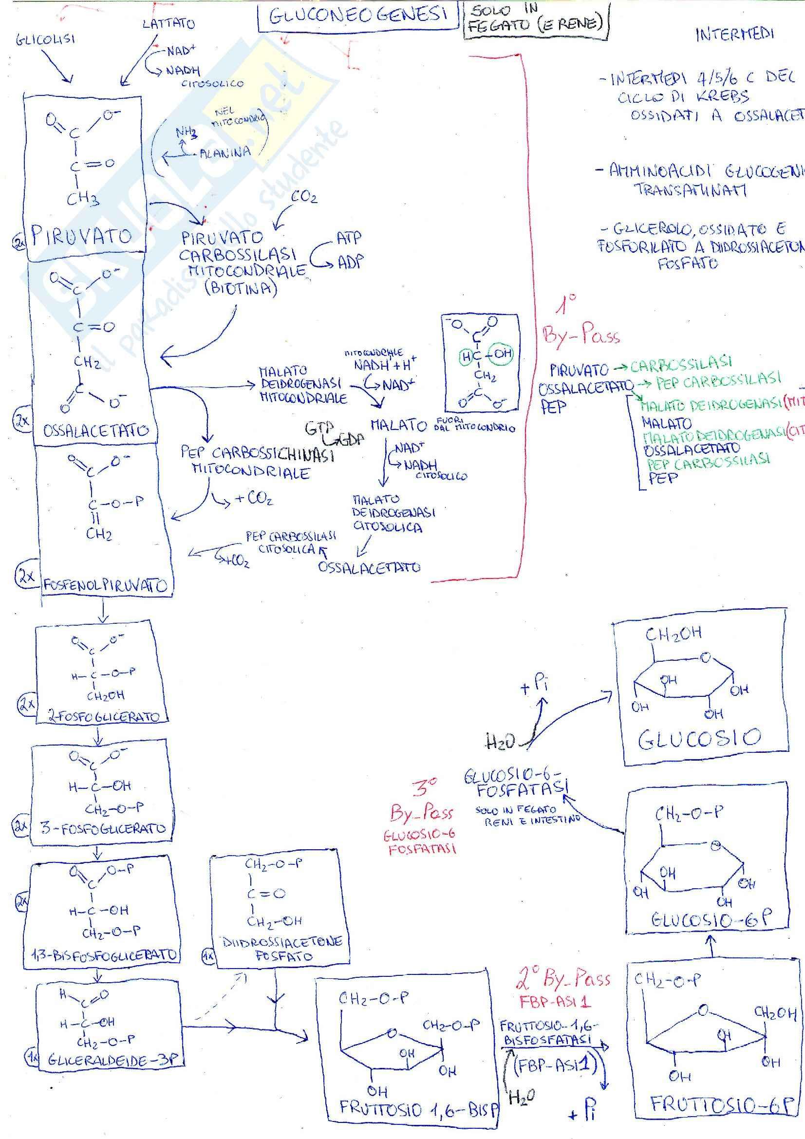 Riassunto esame Biochimica medica generale, prof. Chiarugi Pag. 36