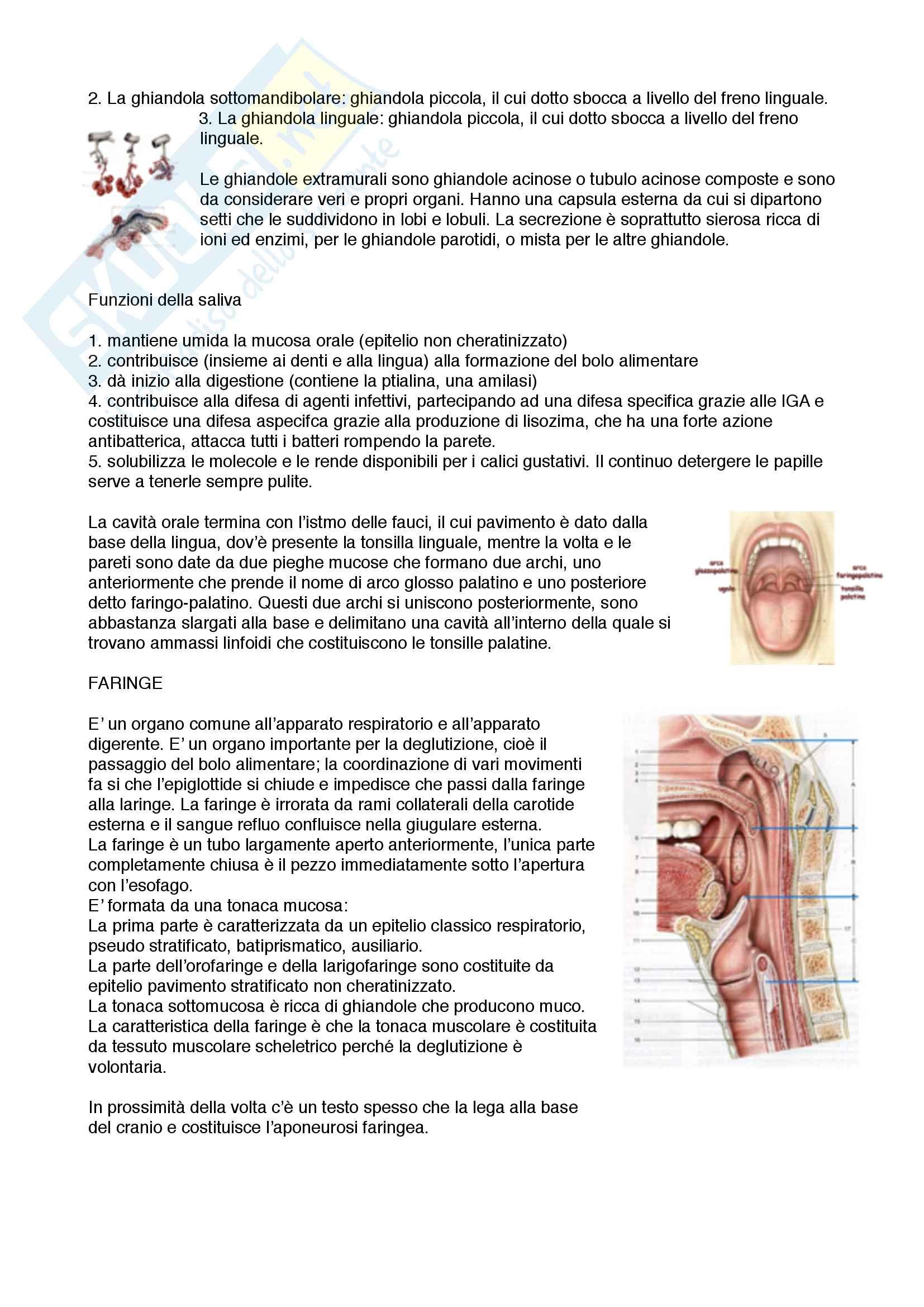 Sistema Nervoso Endocrino Urinario e Digerente Pag. 46