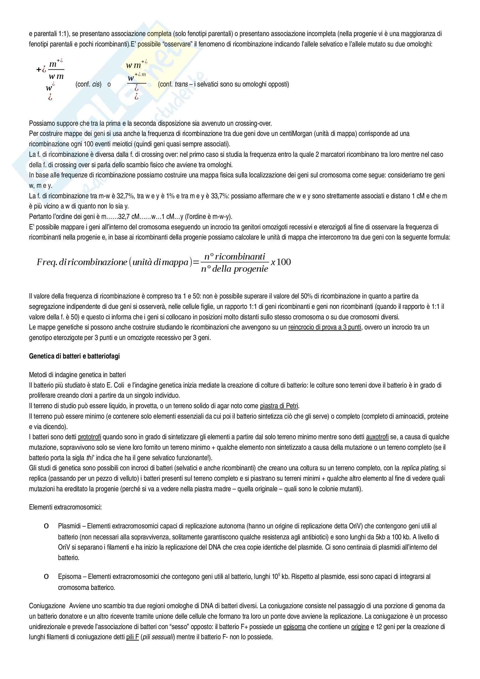 Riassunto esame Genetica, Genetica. Un approccio molecolare Russell, prof. Cicchini Pag. 16