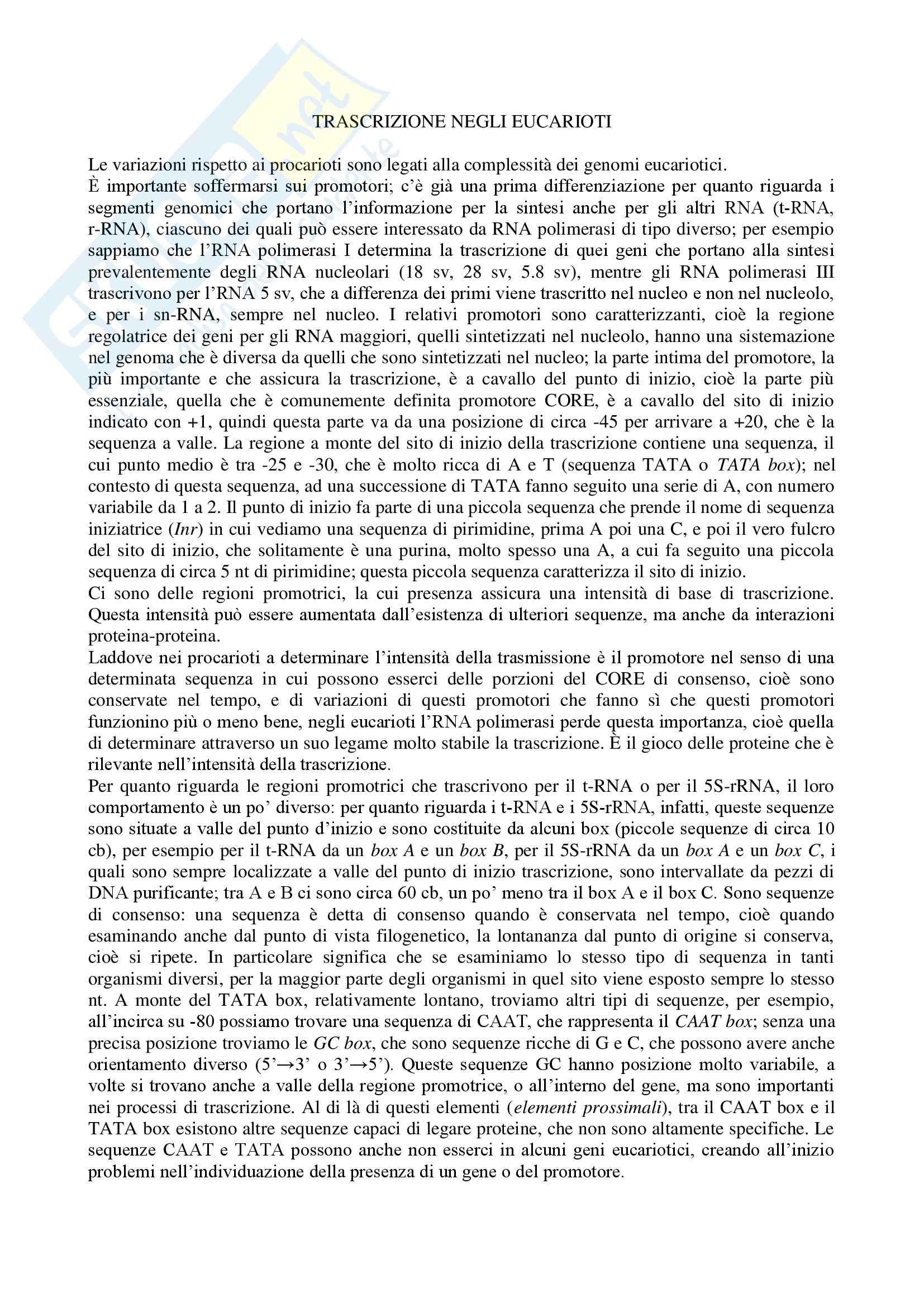 Biologia e genetica - trascrizione negli eucarioti