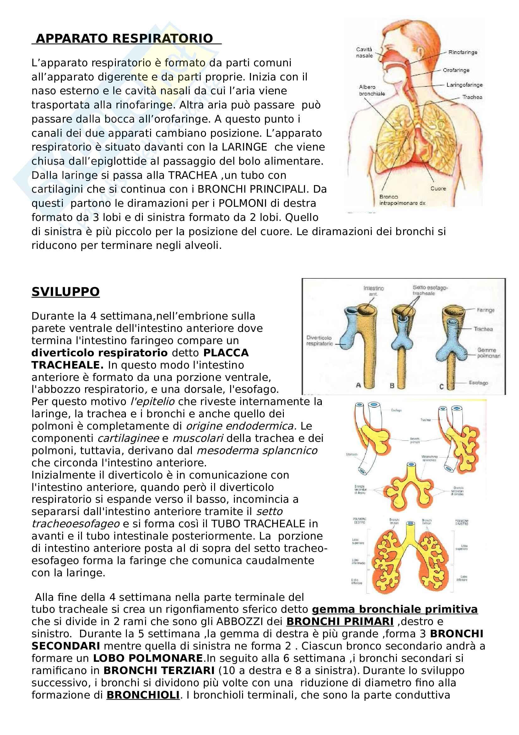 Sviluppo apparato respiratorio - Riassunto esame Embriologia, prof. Canipari, libro consigliato De felici