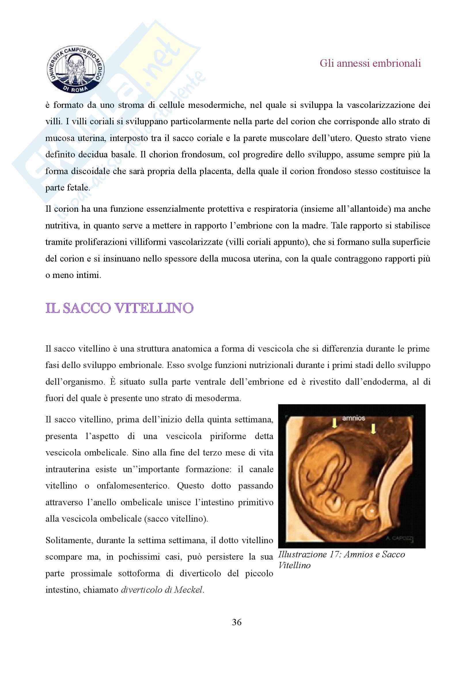 Gli annessi embrionali Pag. 36