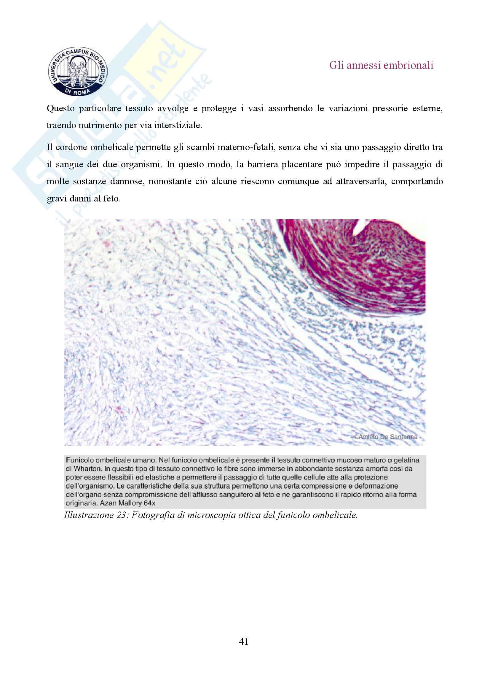 Gli annessi embrionali Pag. 41
