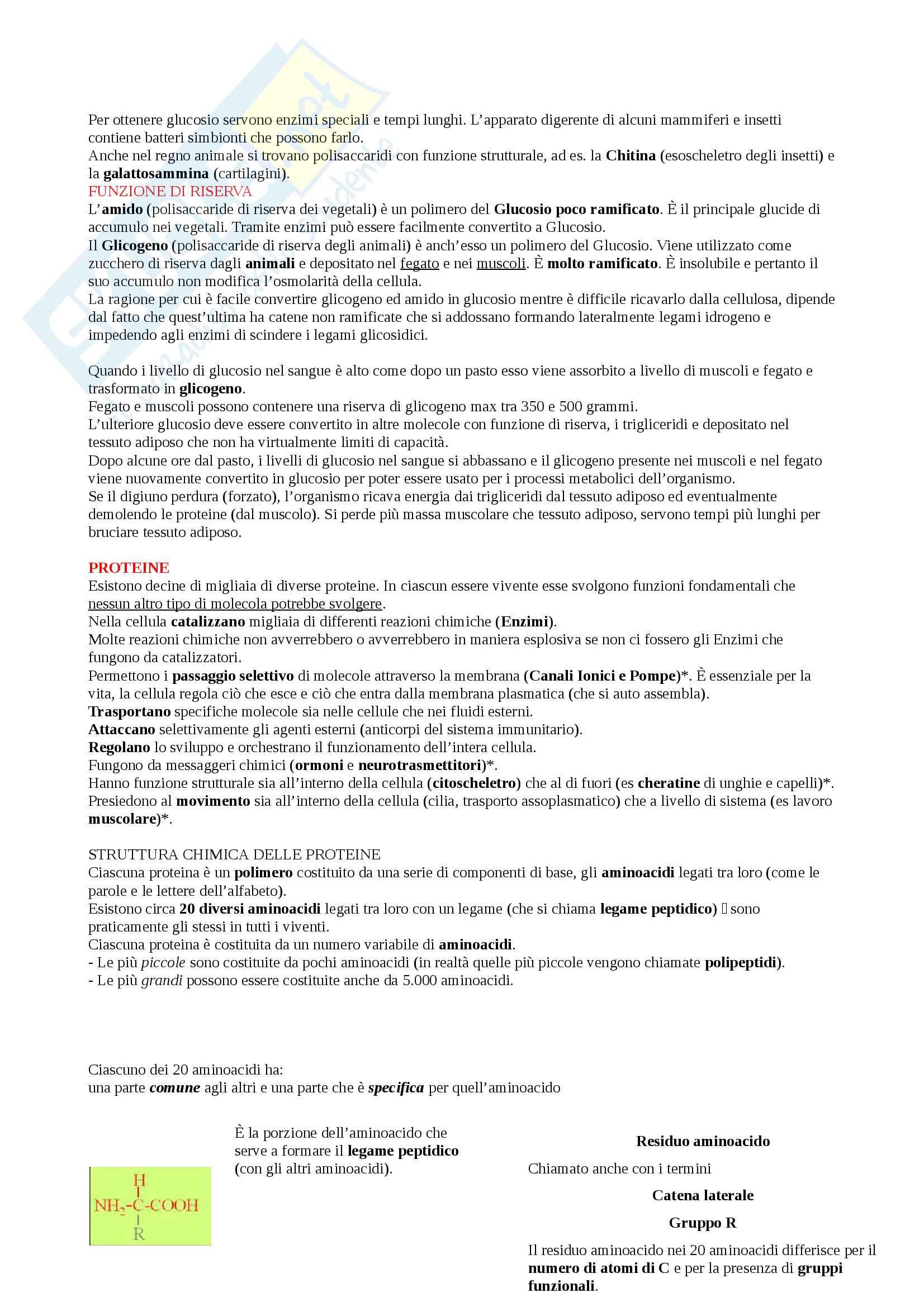 Appunti Biologia-Chimica per superare OFA!! Utile anche per superare il Test d'ingresso Pag. 11