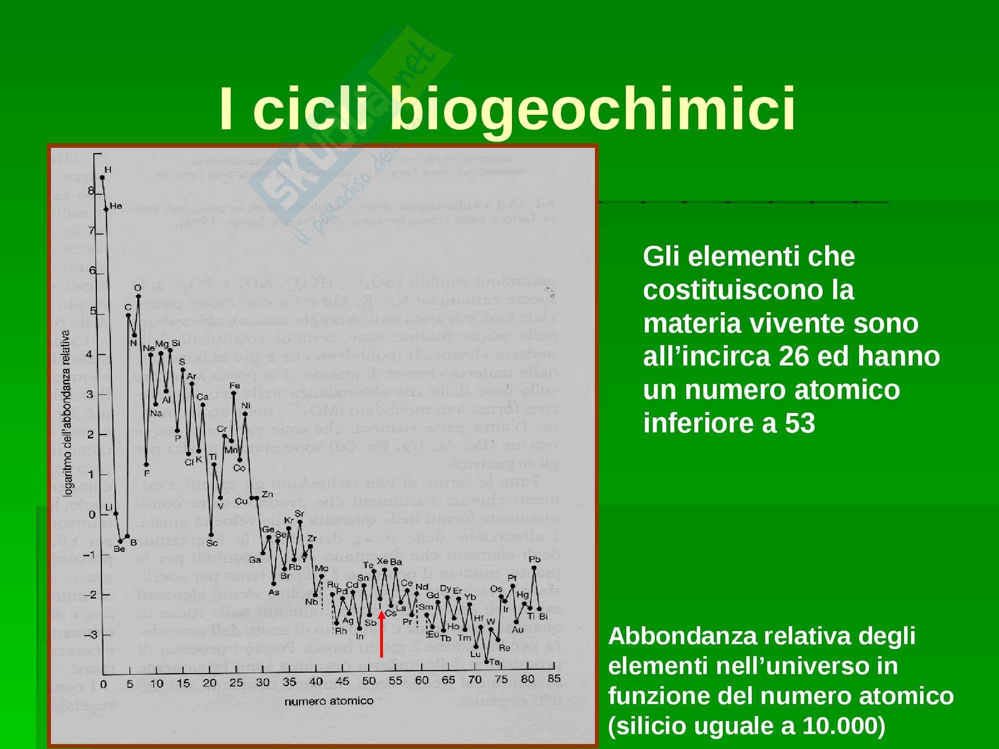 Ecologia - cicli biogeochimici