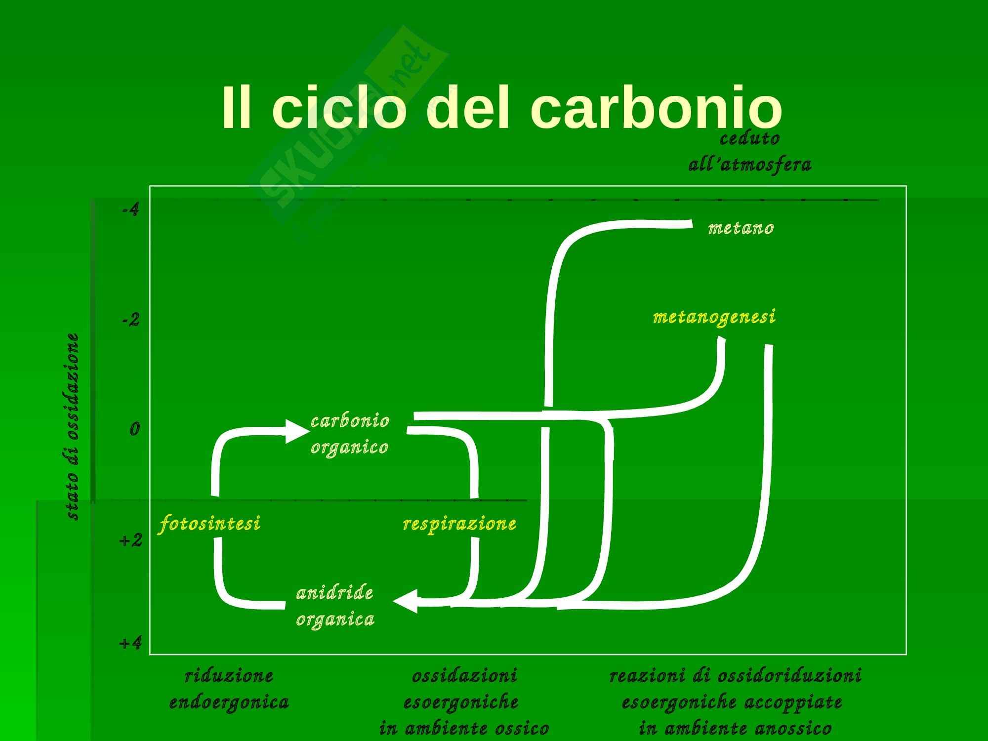 Ecologia - cicli biogeochimici Pag. 16