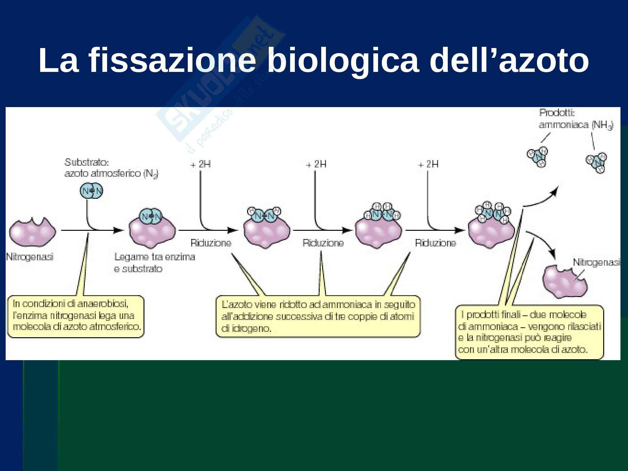 Ecologia - cicli biogeochimici Pag. 46