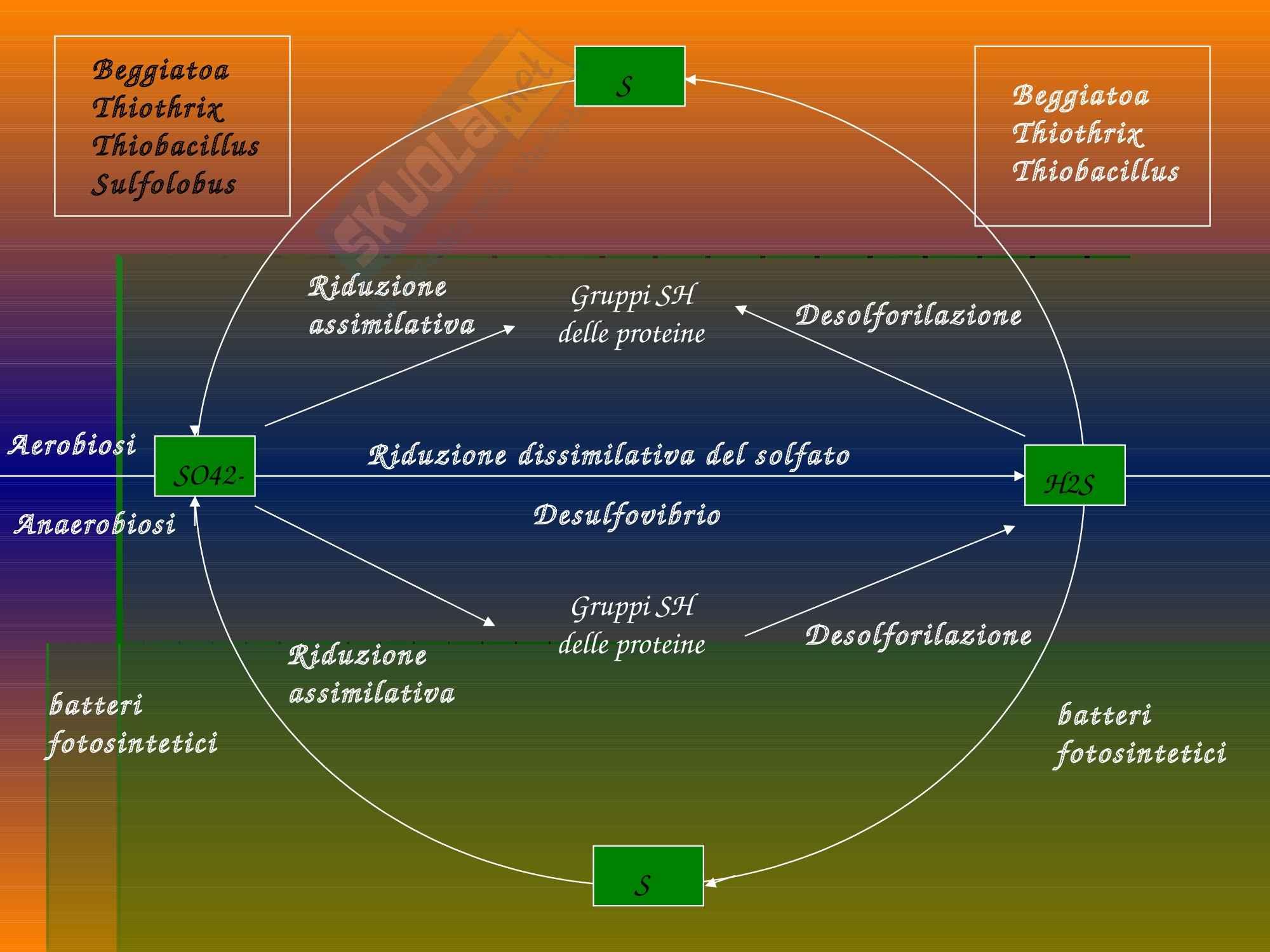 Ecologia - cicli biogeochimici Pag. 66