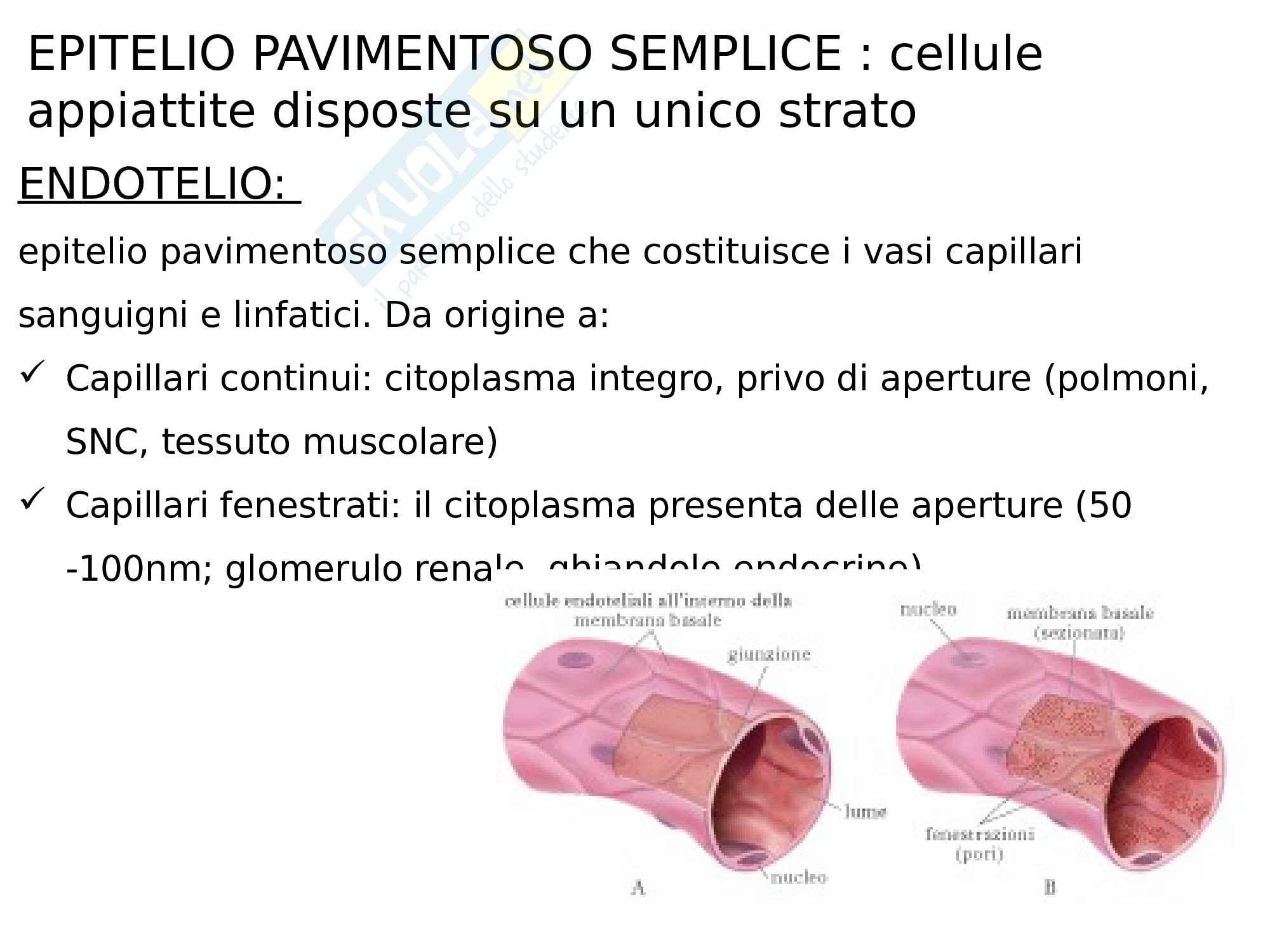 1- Tessuto epiteliale Pag. 16