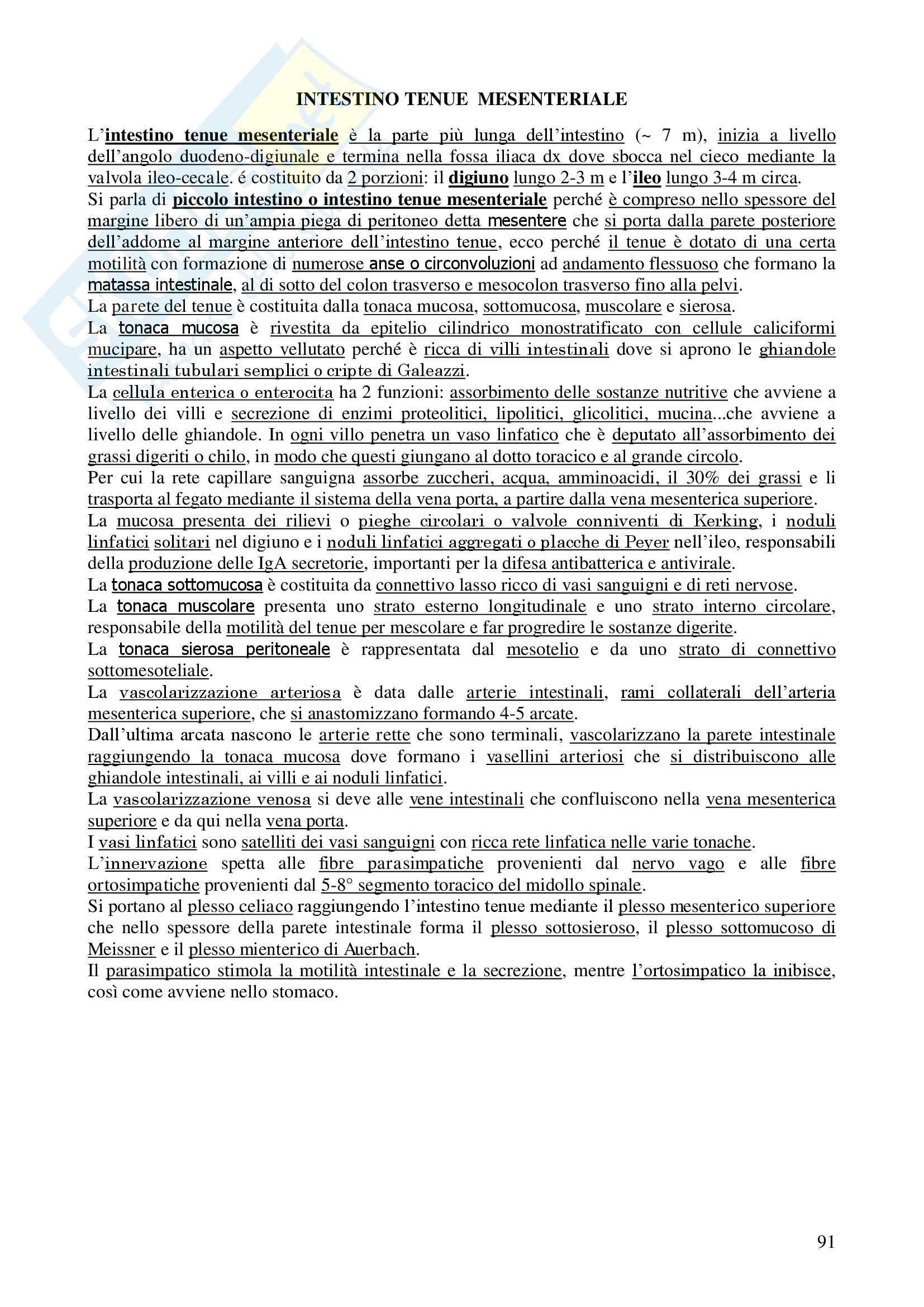 Chirurgia - chirurgia generale - Appunti Pag. 91
