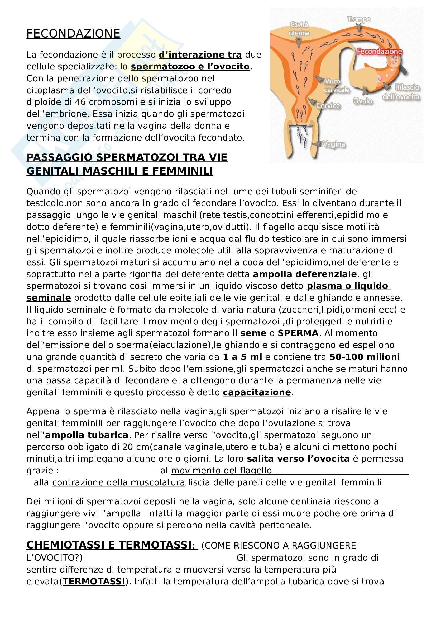 Fecondazione - Riassunto esame Embriologia, prof. Canipari, libro consigliato De felici