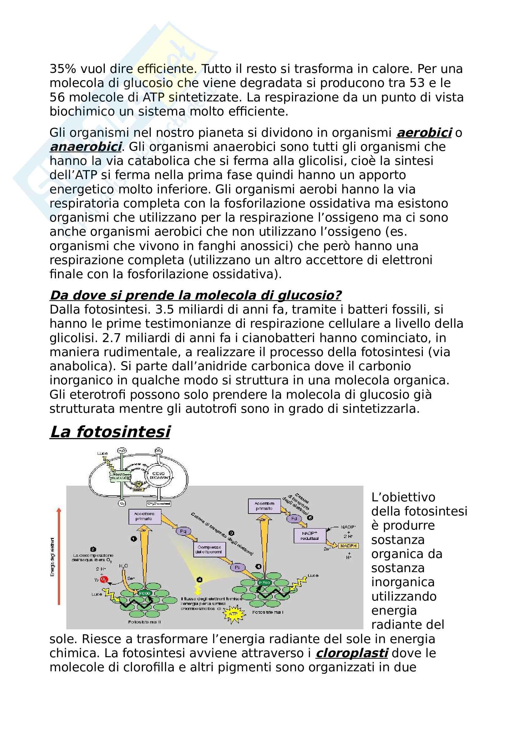 Appunti di Ecologia, Sandra Urbanelli Pag. 6