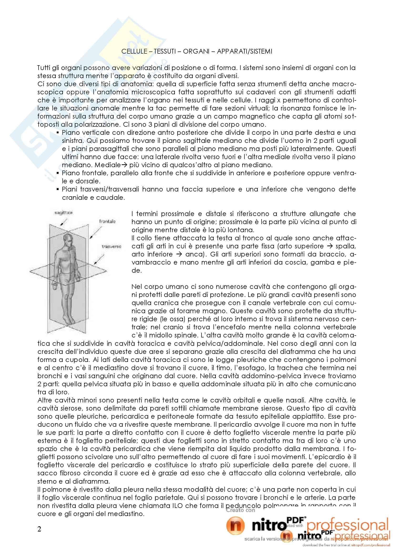 Struttura, morfologia e funzionamento del corpo umano I - Appunti Pag. 2
