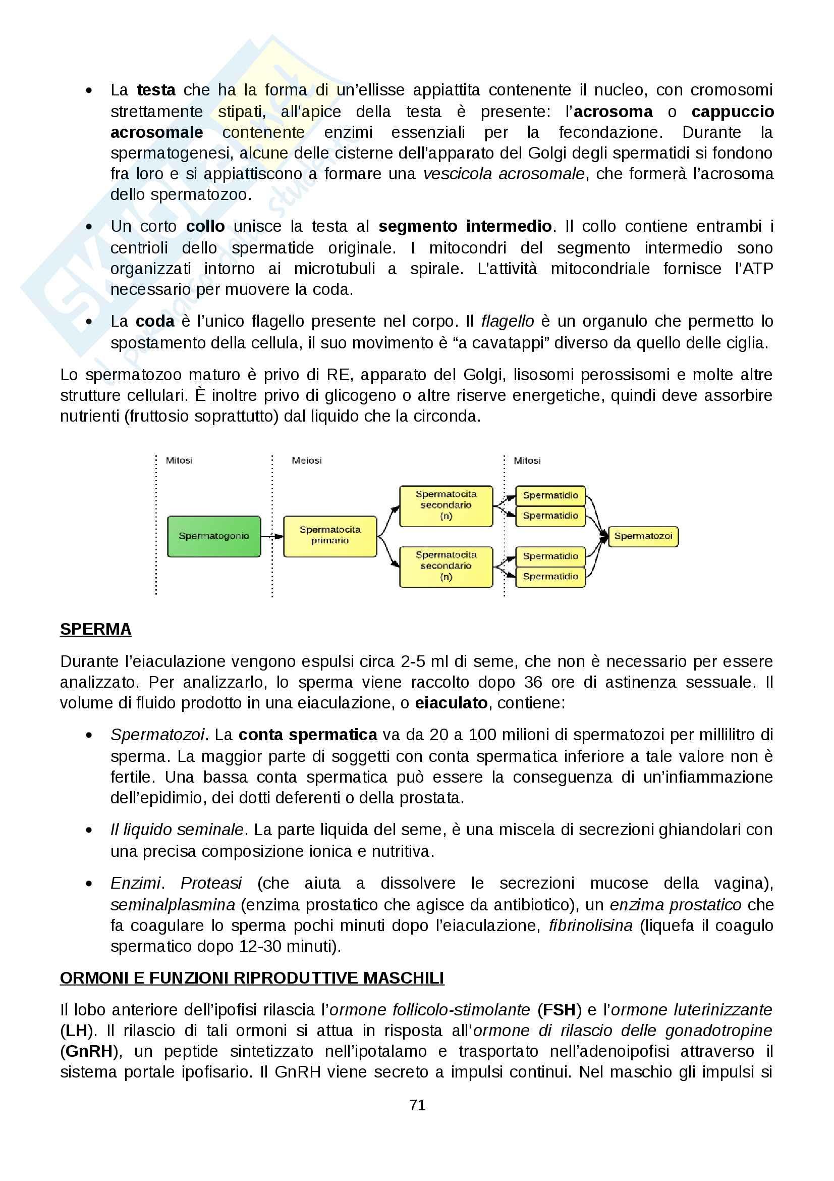 Anatomia umana - Completa Pag. 71