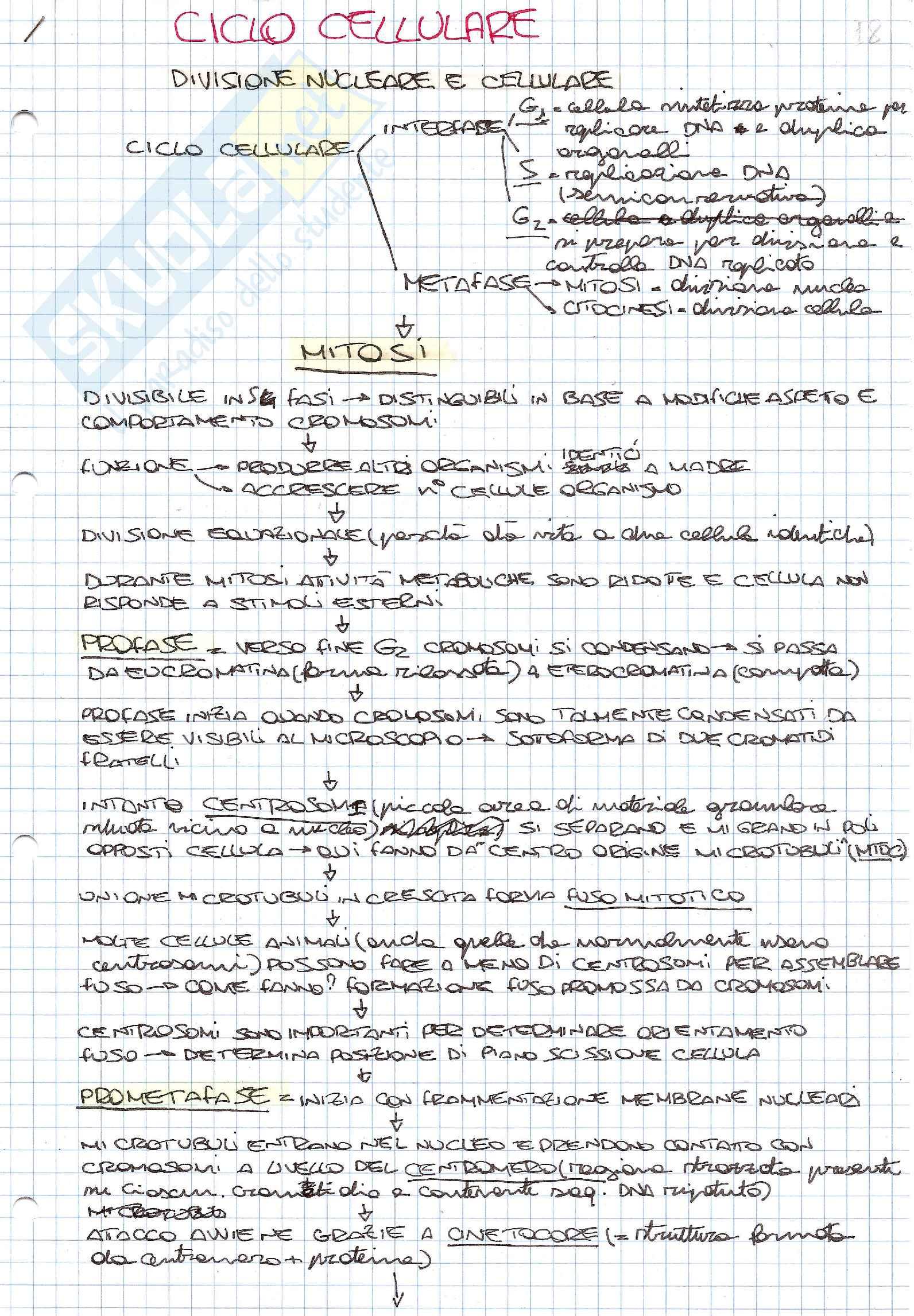 Schemi di biologia generale e cellulare per l'esame della prof. Patrizia Limonta sul ciclo cellulare e la sua regolazione