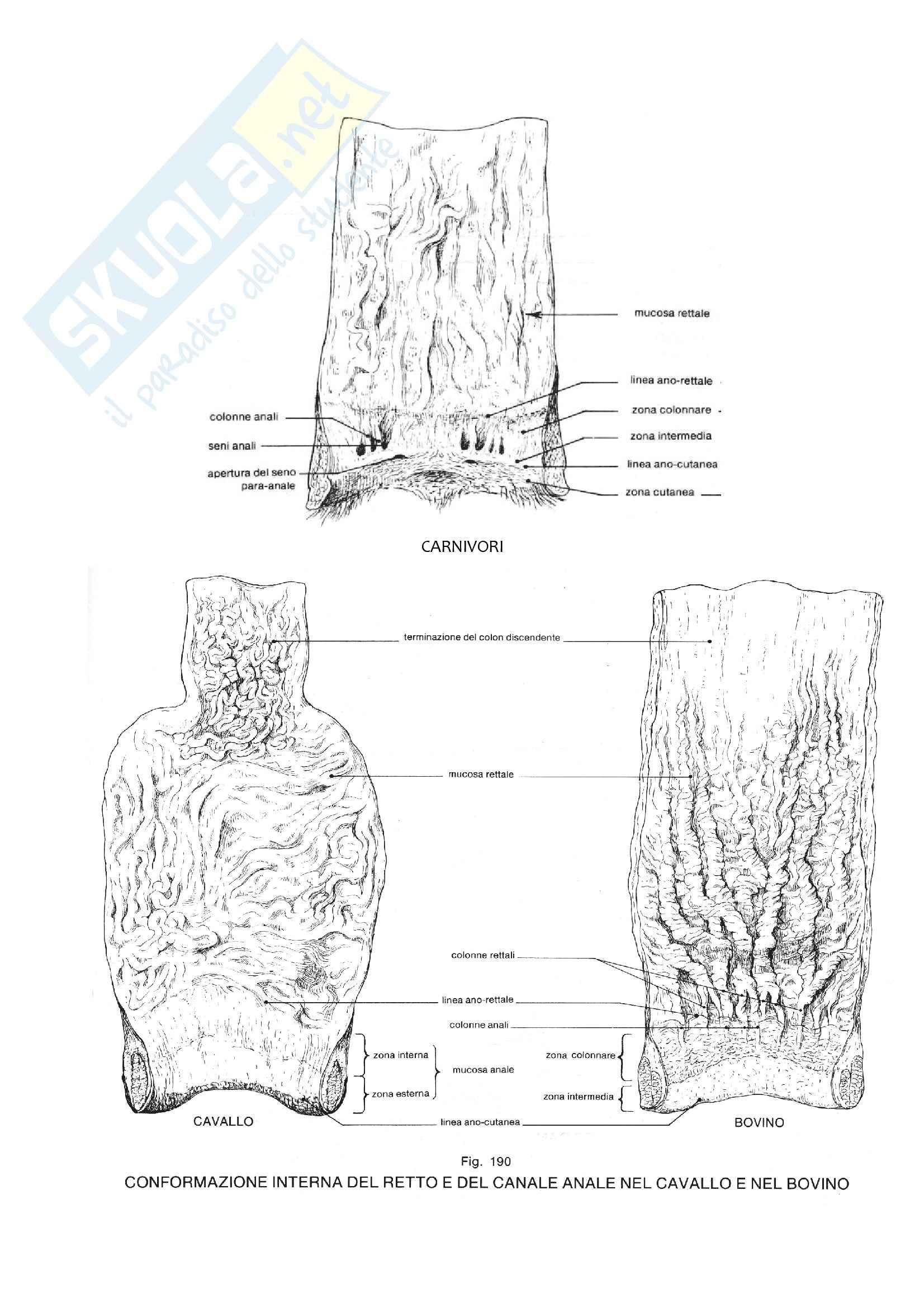 Apparato Digerente, Anatomia con elementi di istologia Pag. 66