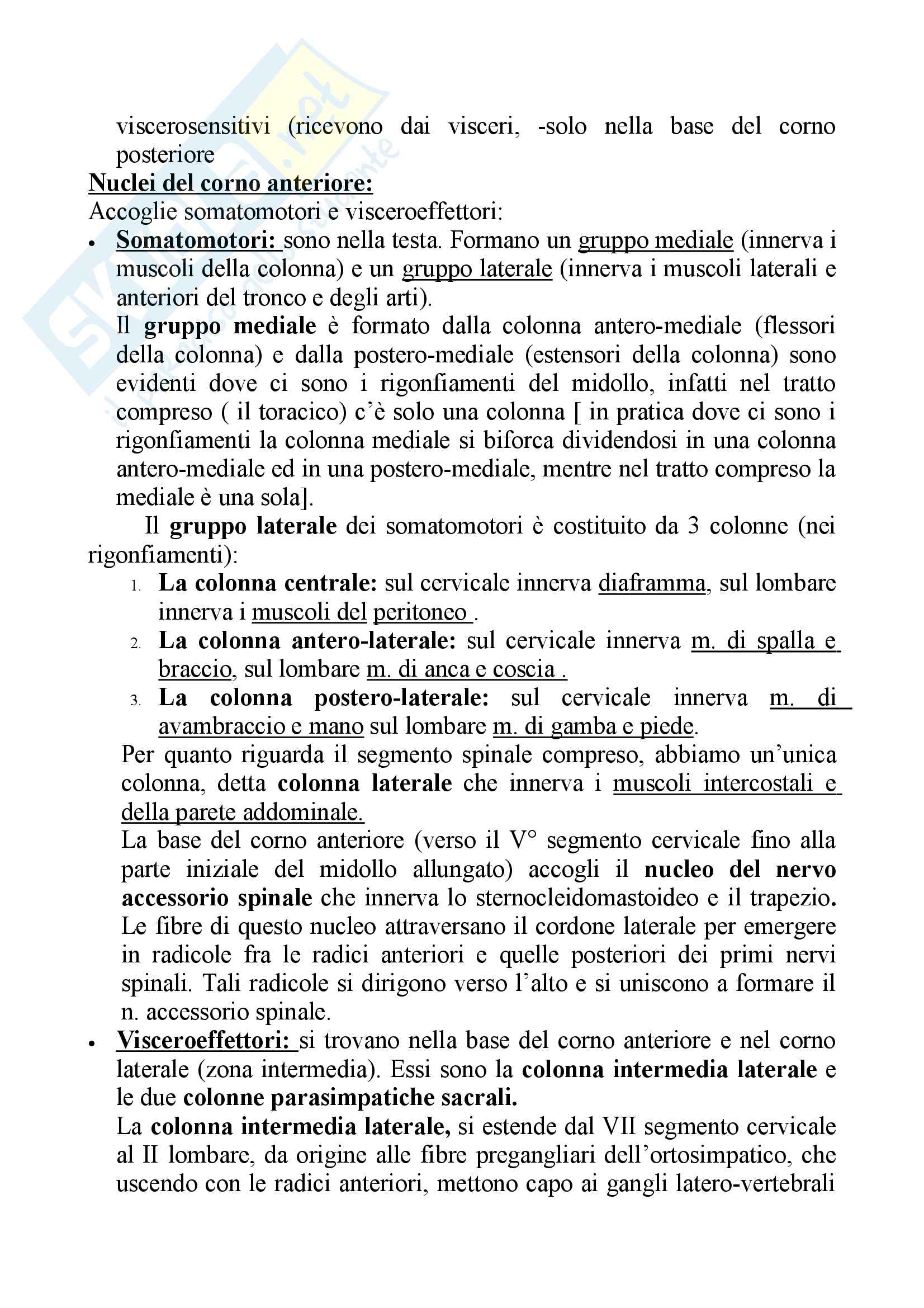 Fisiologia – Midollo spinale Pag. 6