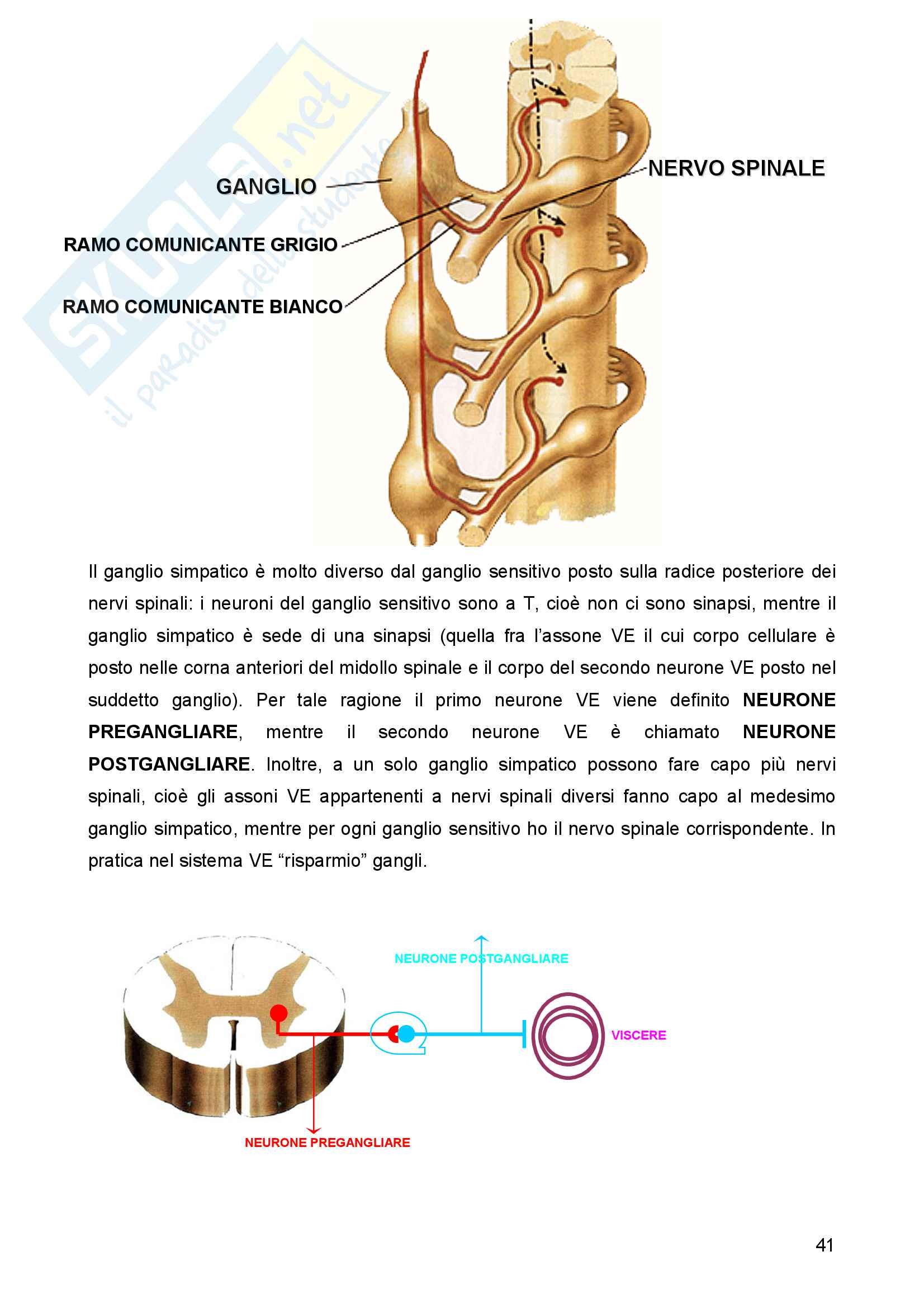 Sistema nervoso Pag. 41