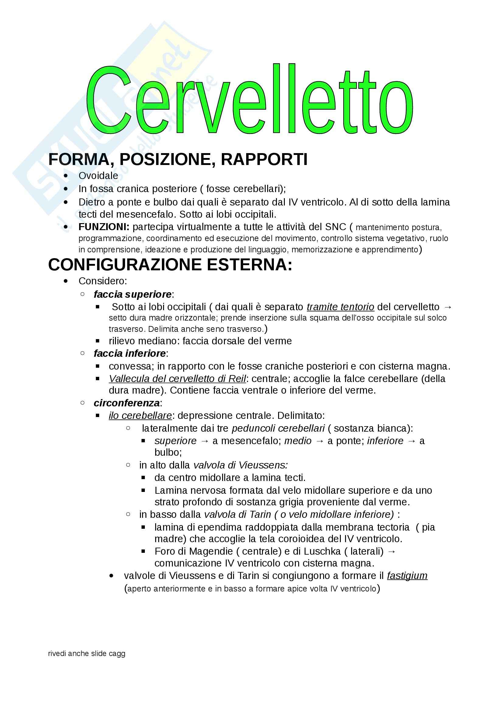 Cervelletto, Anatomia