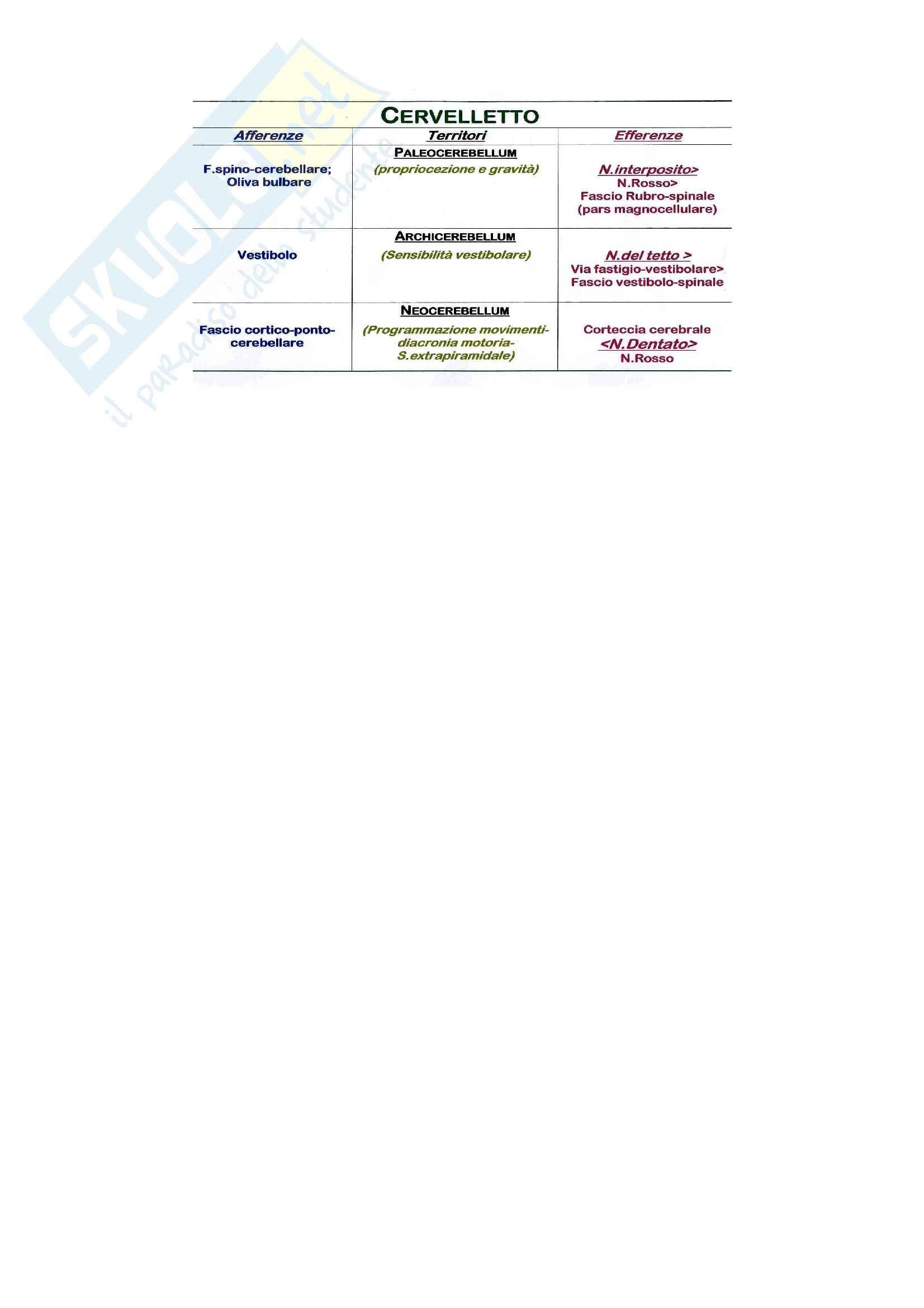 Cervelletto, Anatomia Pag. 6