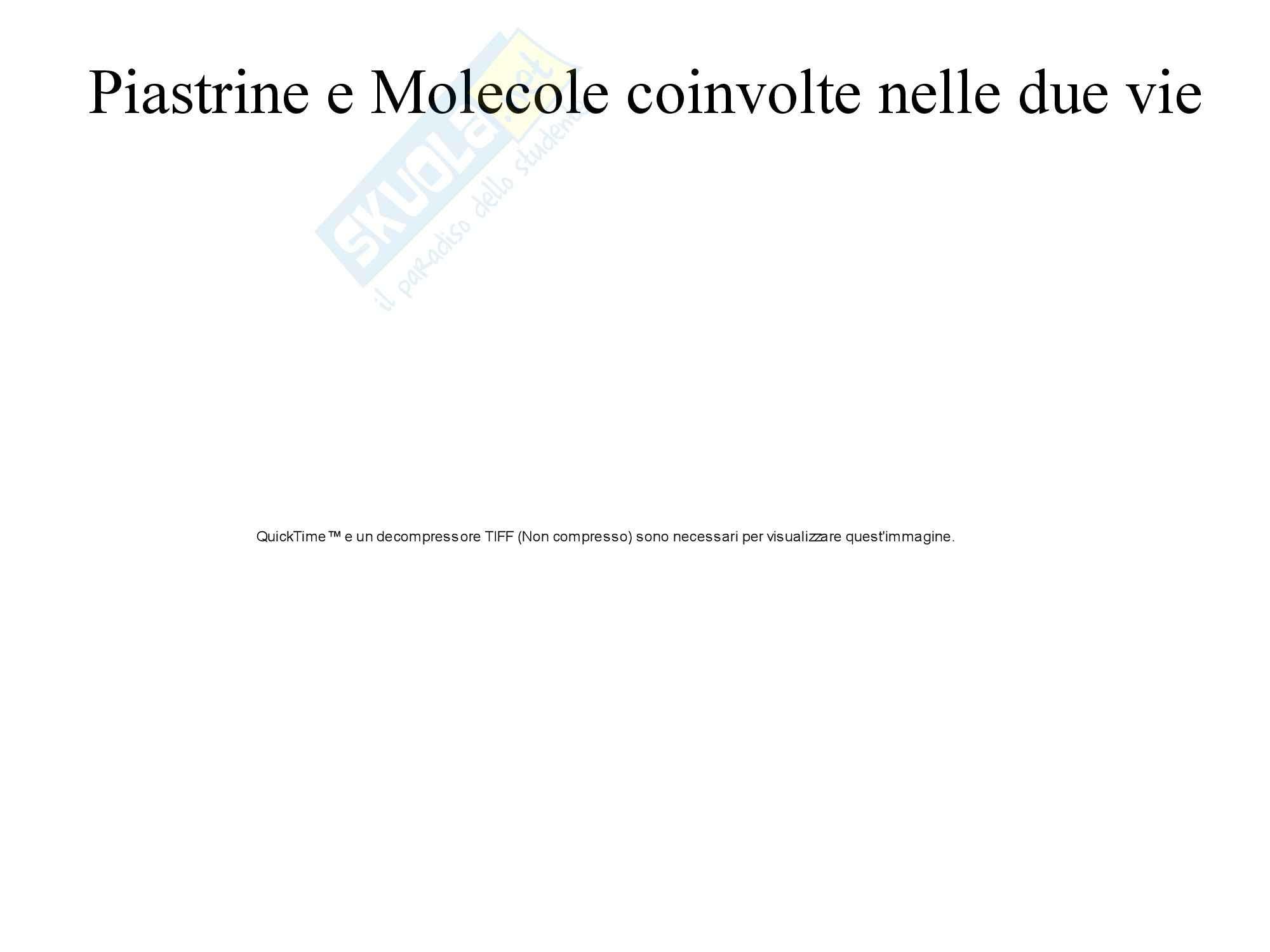 Biochimica Clinica - Emocromo Pag. 16