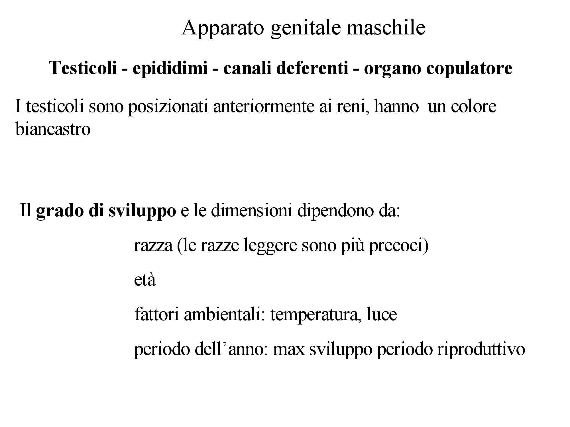 Gallo - Apparato genitale