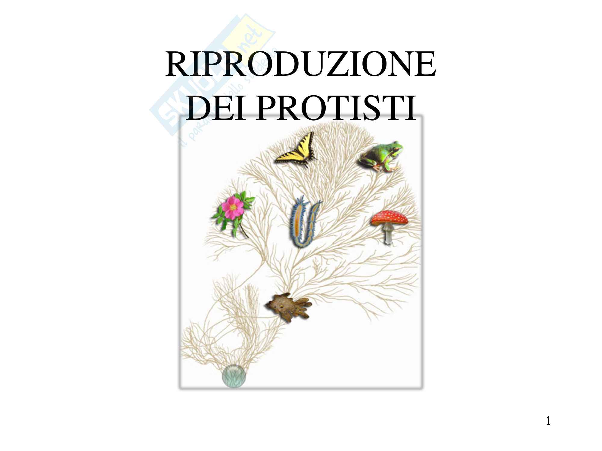Riproduzione dei protisti, zoologia, scienze biologiche