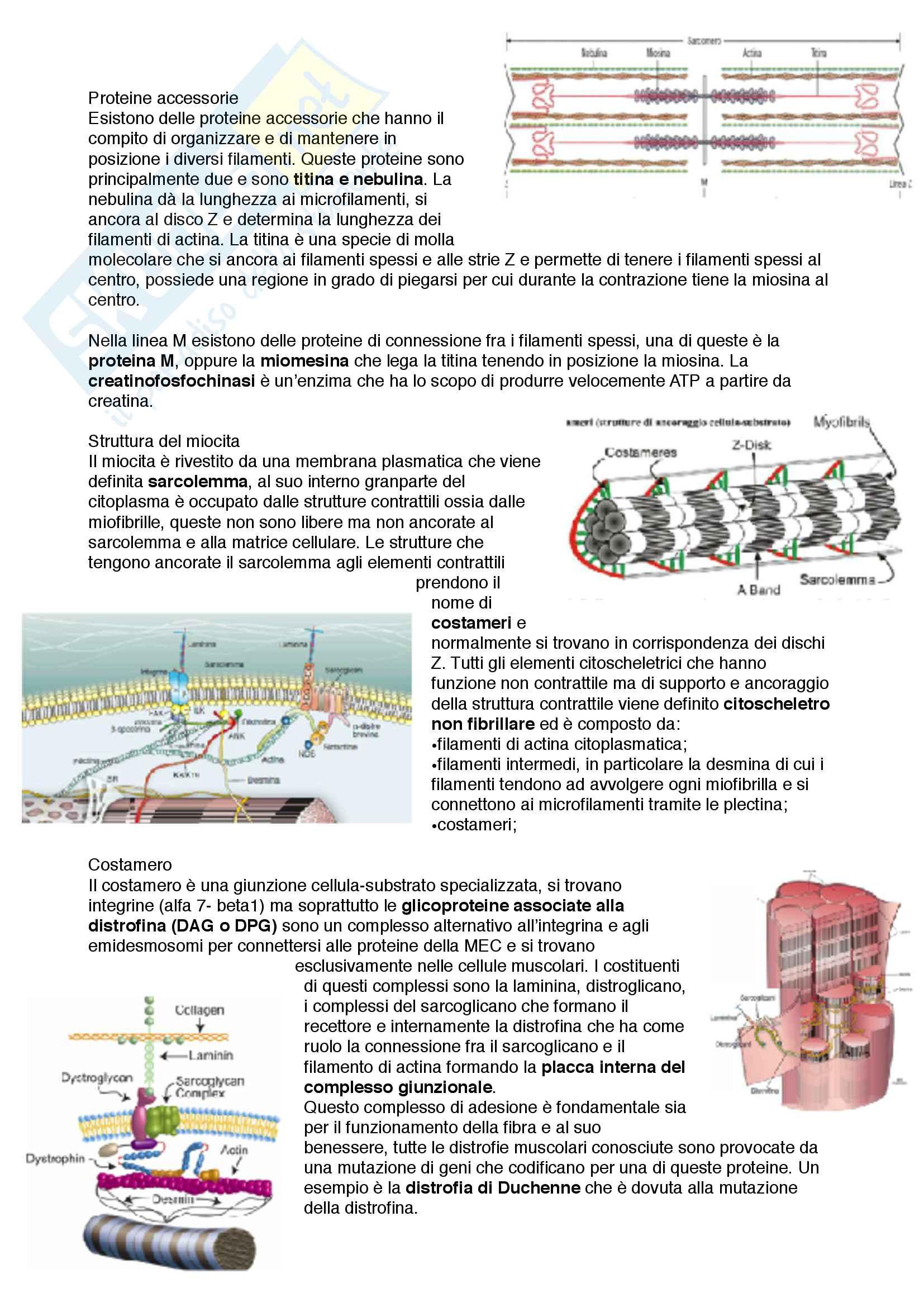 Documento completo con immagini per esame di Istologia med. 3-4 Unipd Pag. 71