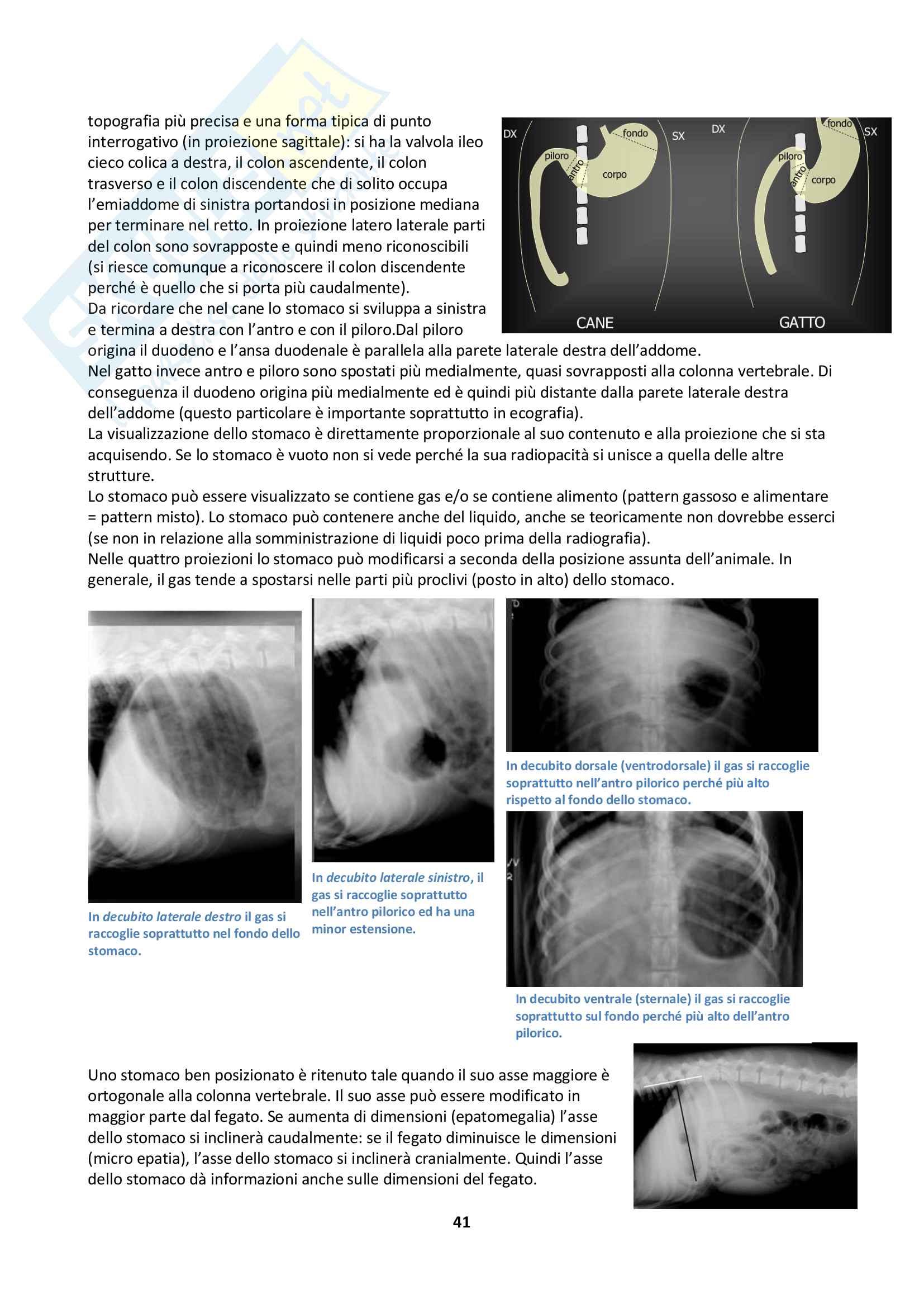 Anatomia Radiografica Pag. 41