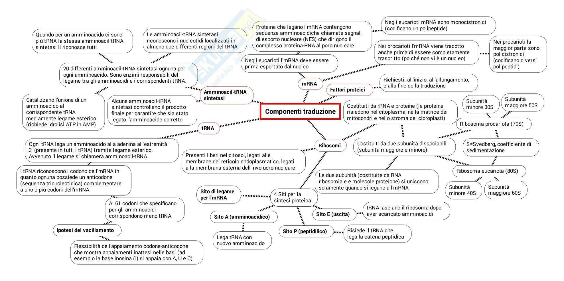 Schema su Codice genetico traduzione trascrizione maturazione indirizzamento smistamento