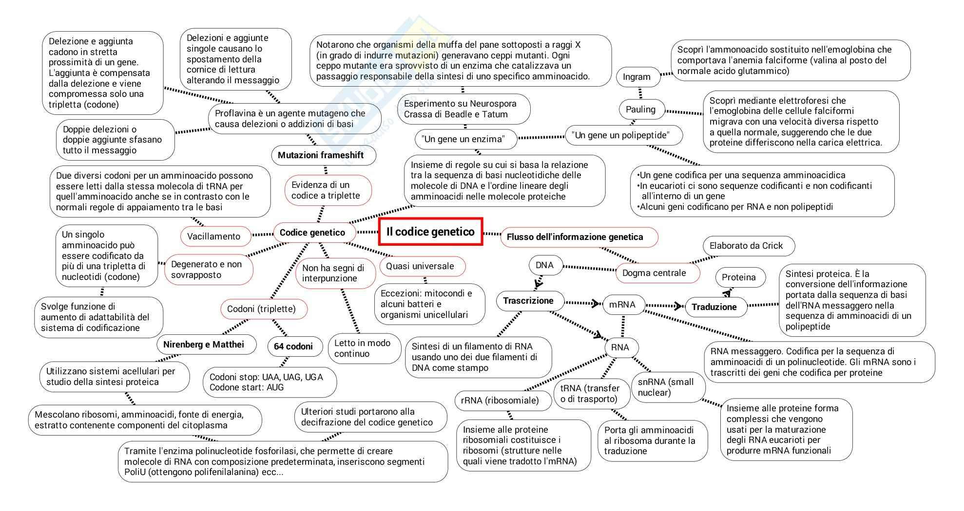 Schema su Codice genetico traduzione trascrizione maturazione indirizzamento smistamento Pag. 2