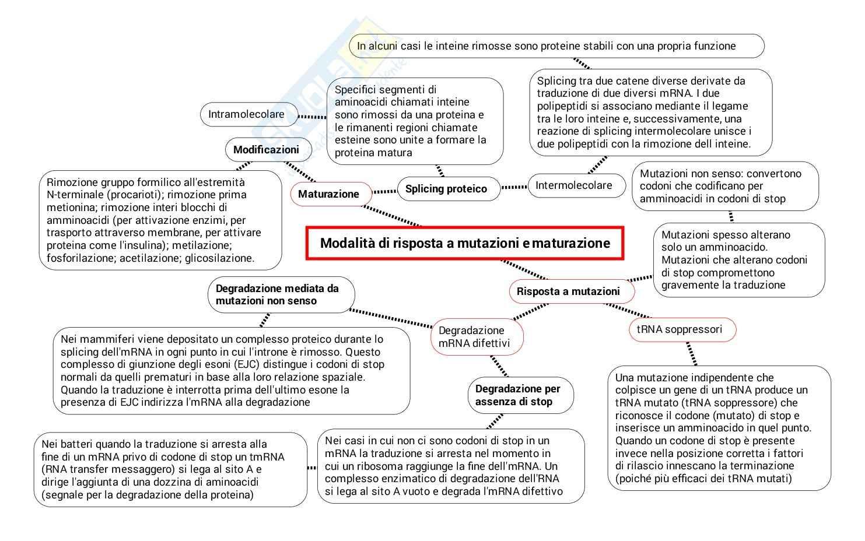Schema su Codice genetico traduzione trascrizione maturazione indirizzamento smistamento Pag. 6