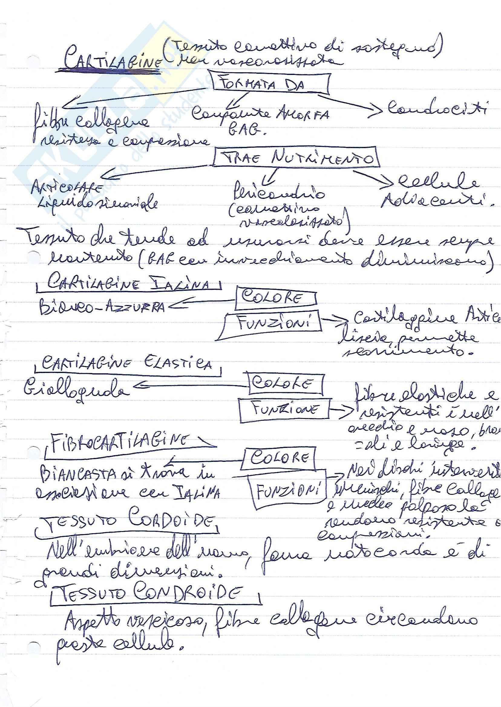 Riassunto esame Citologia, prof. Fasulo, libro consigliato Citologia e istologia