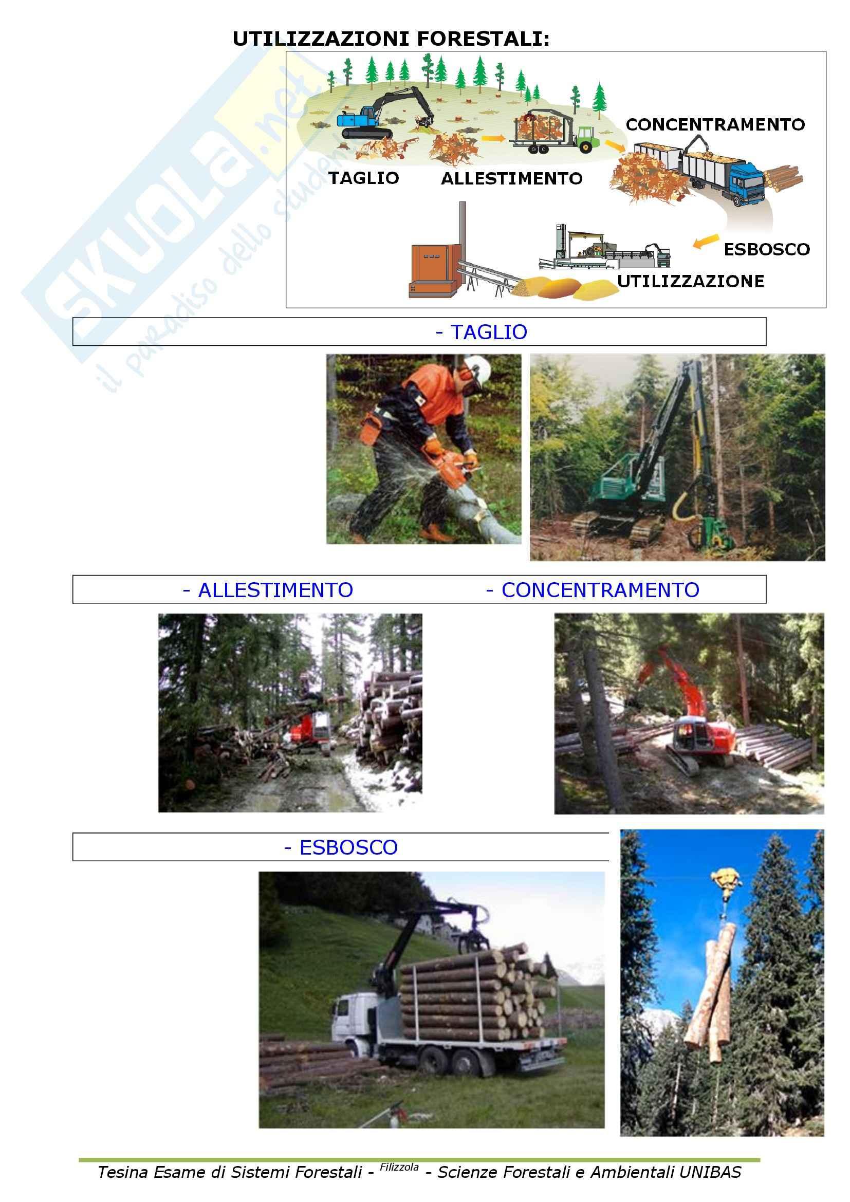 Selvicoltura generale e sistemi forestali - Appunti Pag. 11