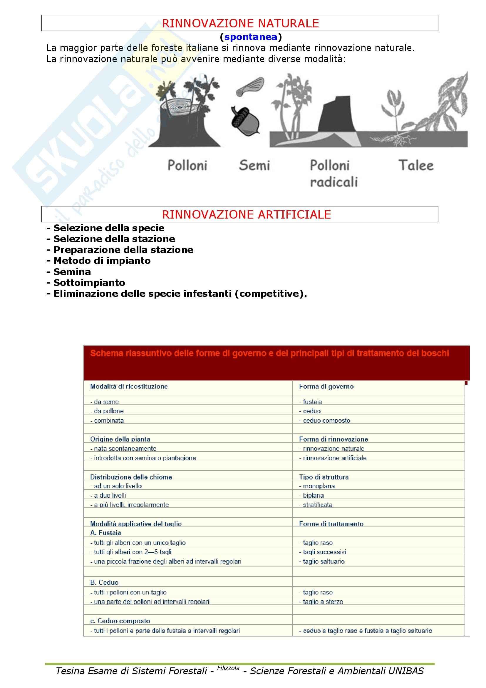 Selvicoltura generale e sistemi forestali - Appunti Pag. 21