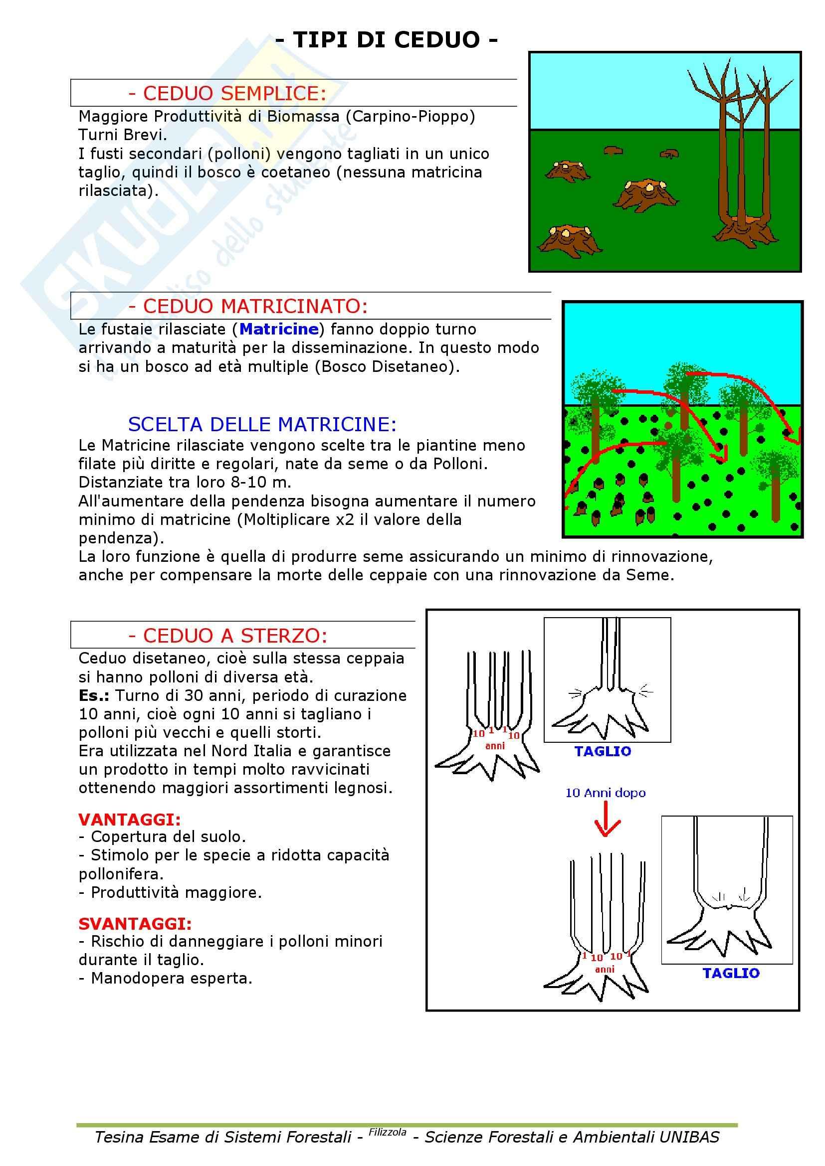 Selvicoltura generale e sistemi forestali - Appunti Pag. 51
