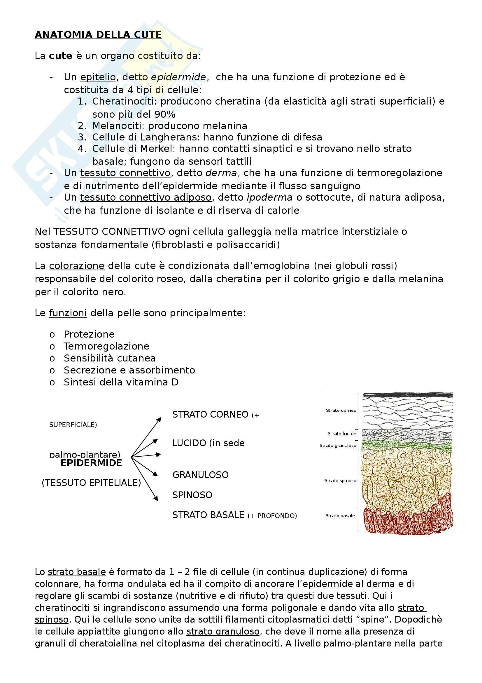 Appunti di Anatomia 1