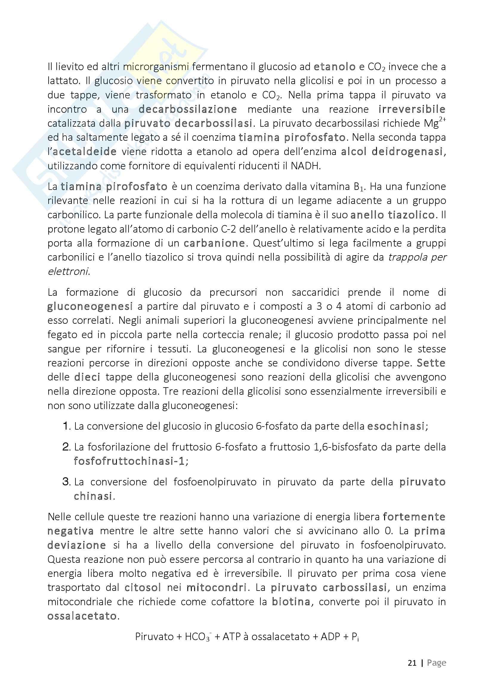 Biochimica, riassunti (prof.ssa Pazzagli) Pag. 21
