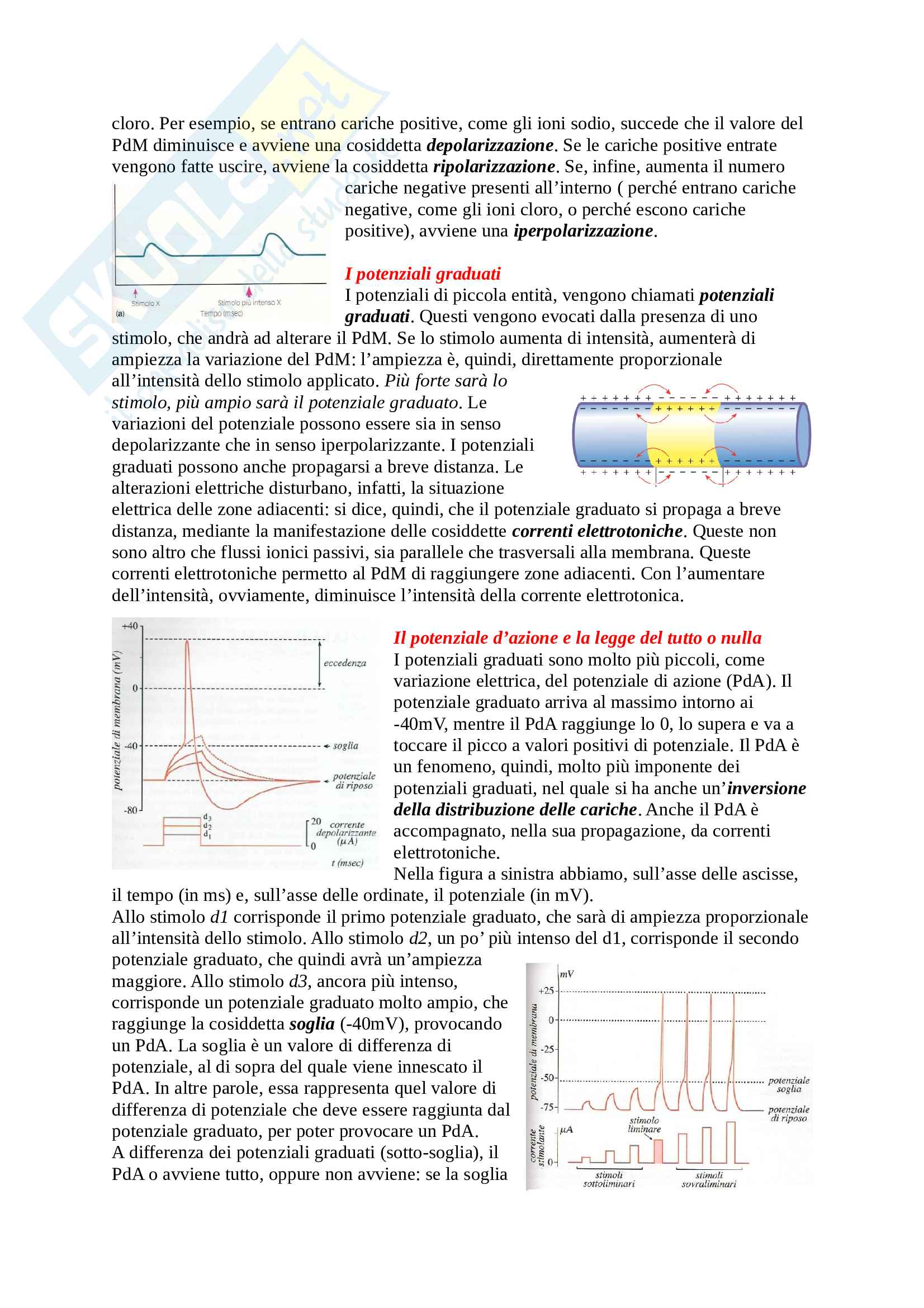 Fisiologia Pag. 6