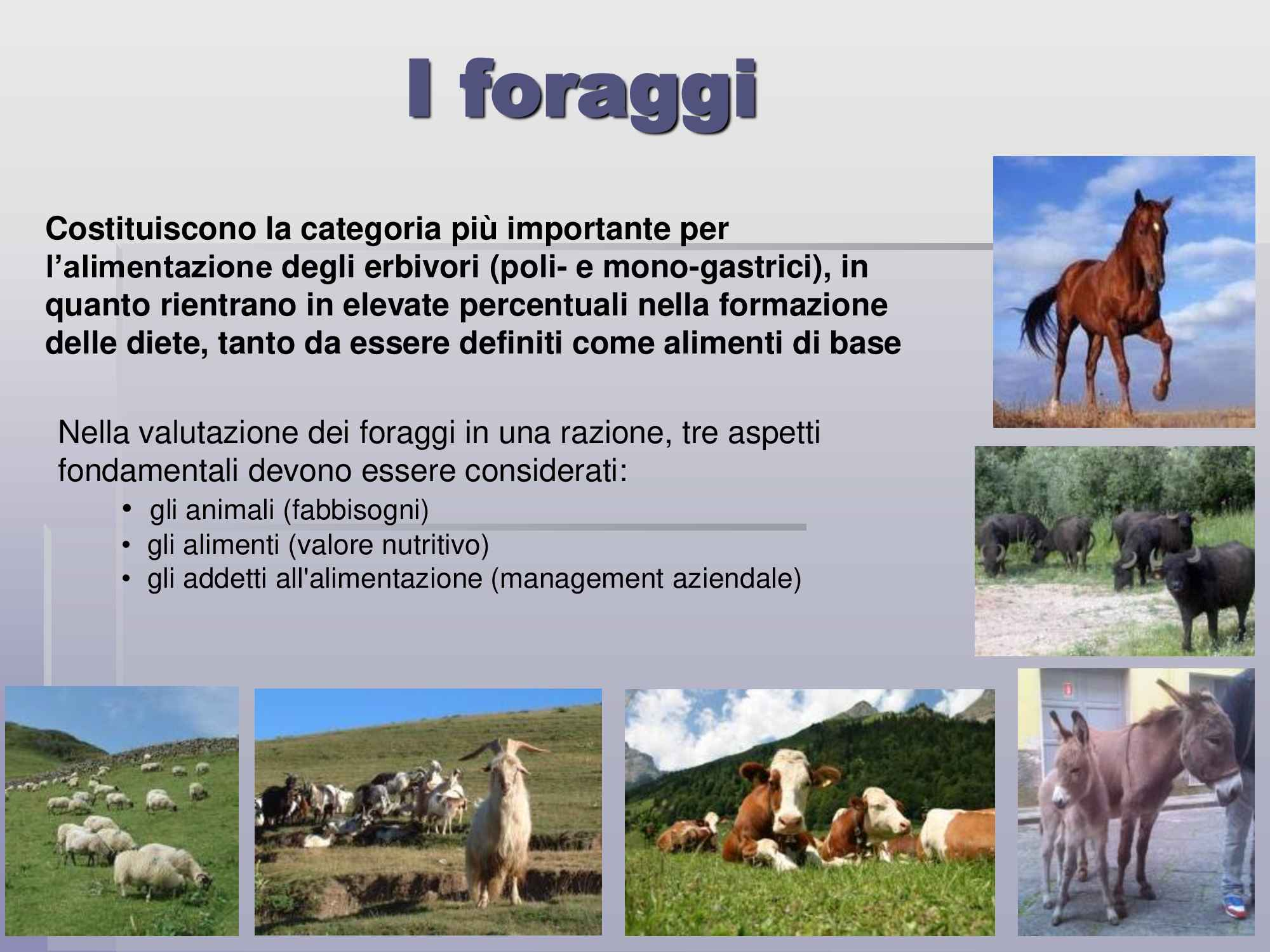 Alimentazione animale: i foraggi