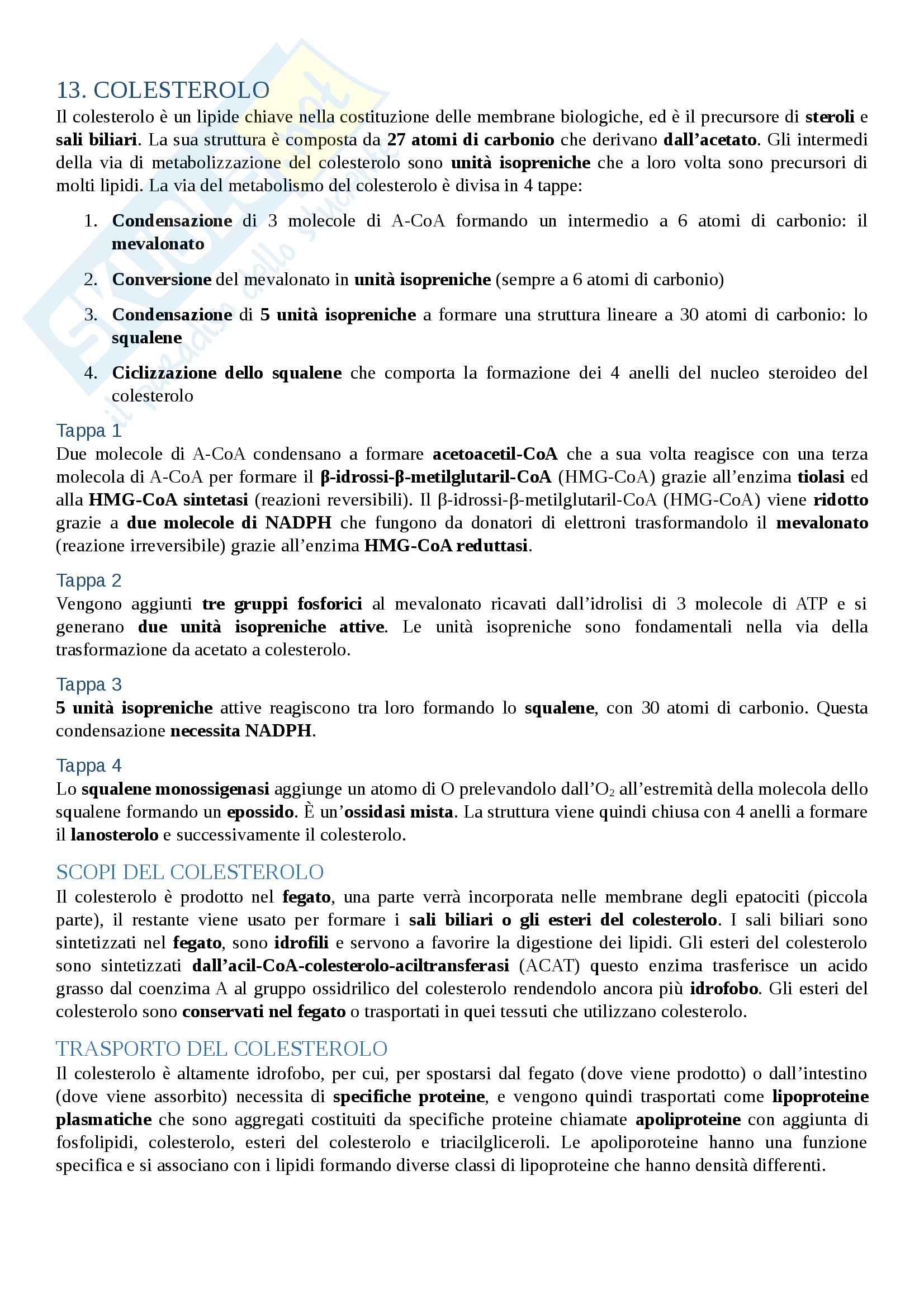 appunto M. Bevilacqua Biochimica