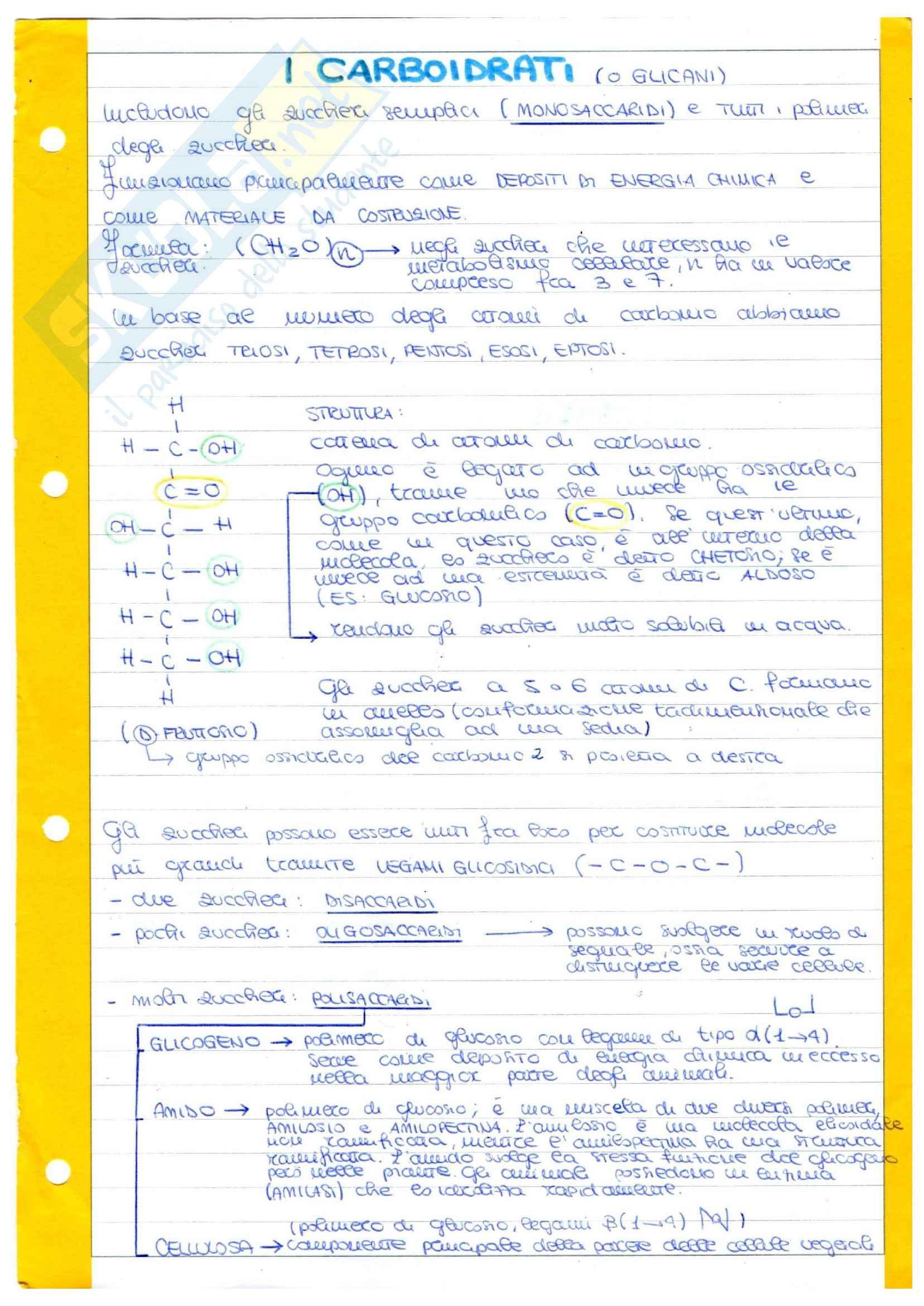Molecole biologiche - DNA - duplicazione - trascrizione - traduzione