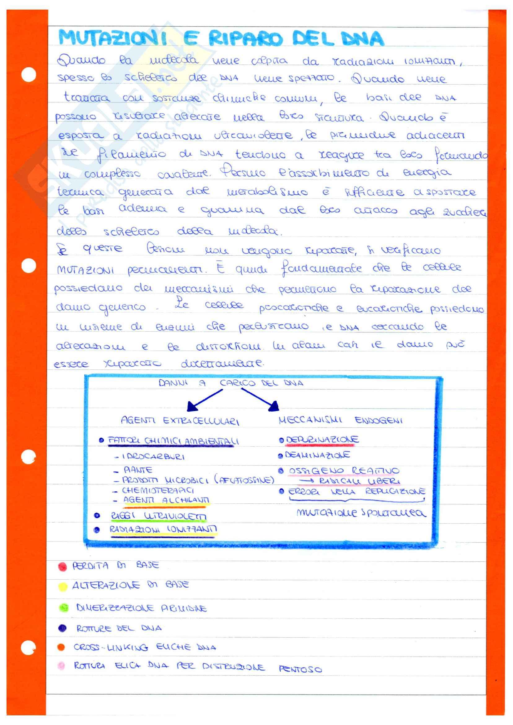 Molecole biologiche - DNA - duplicazione - trascrizione - traduzione Pag. 21